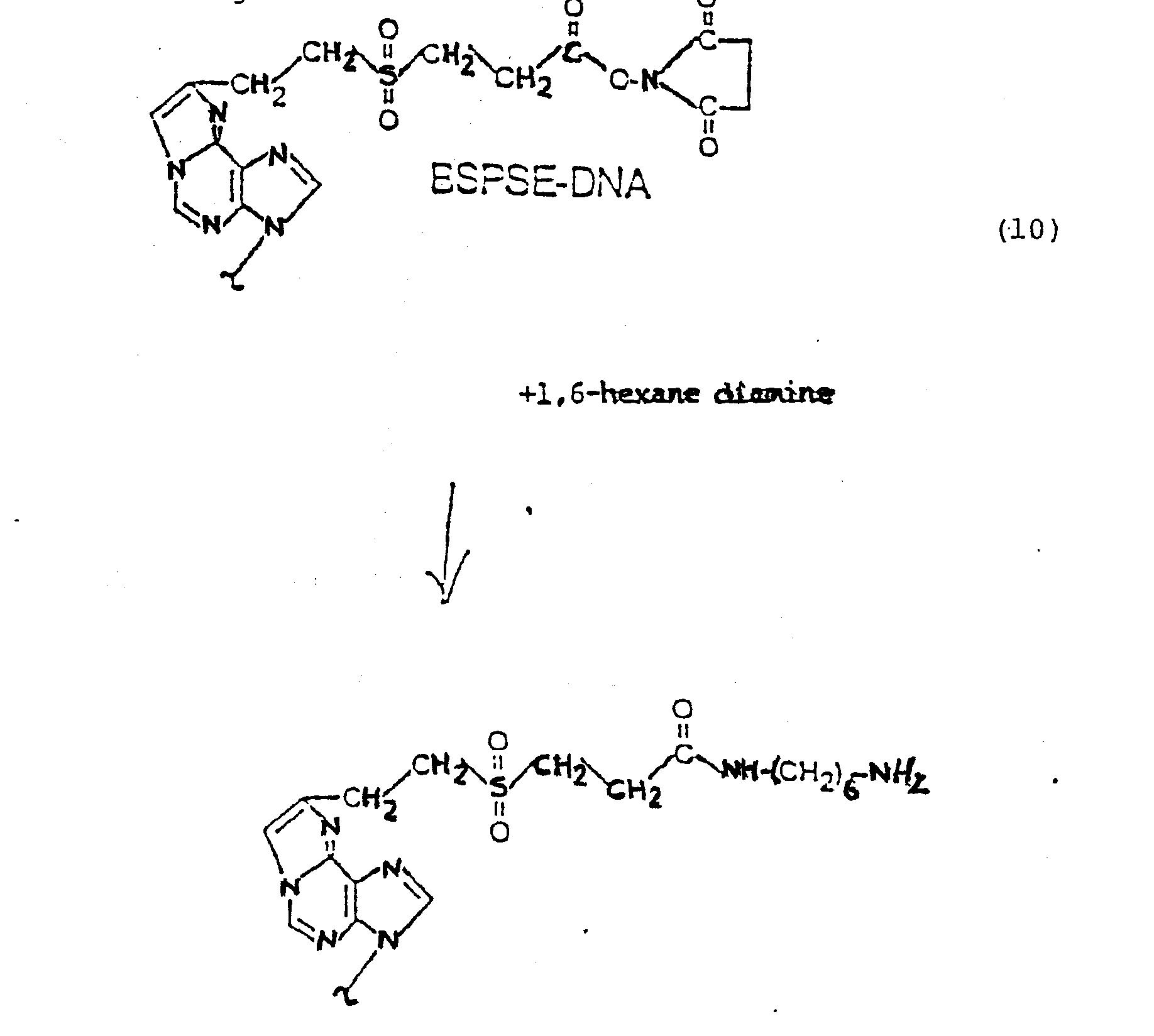 Nonisotopic Dna Probe Techniques Nt700v Ac Component Handlebar Top Bridge Parts Microfiche Schematic Array Ep0138357a2 Labeled Google Patents Rh Com
