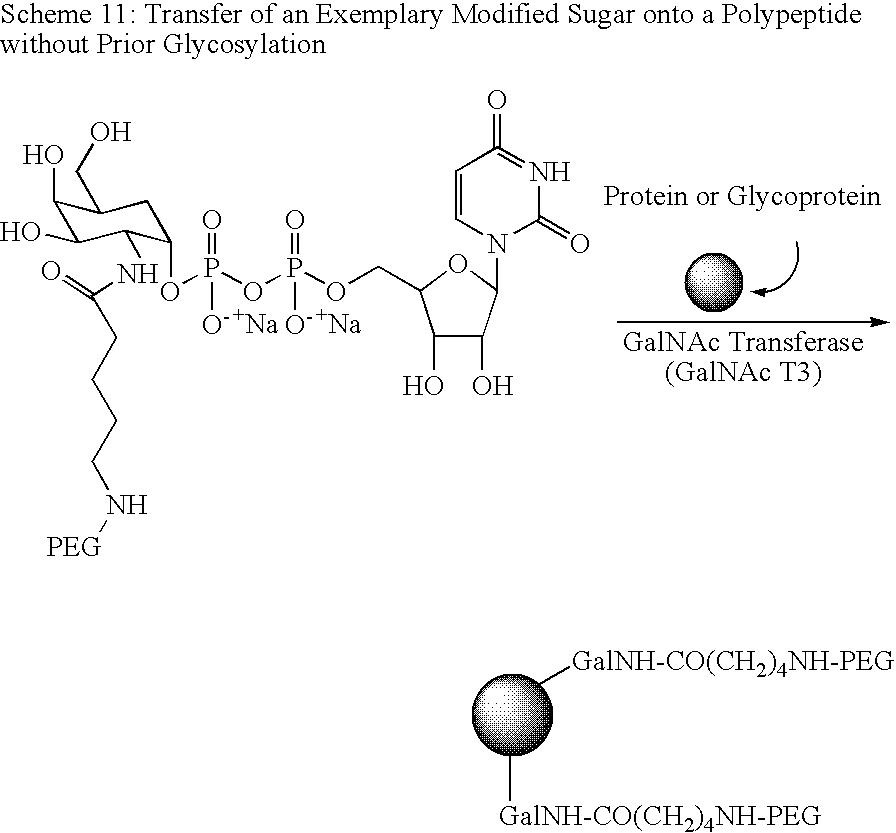 Figure US20080280818A1-20081113-C00067