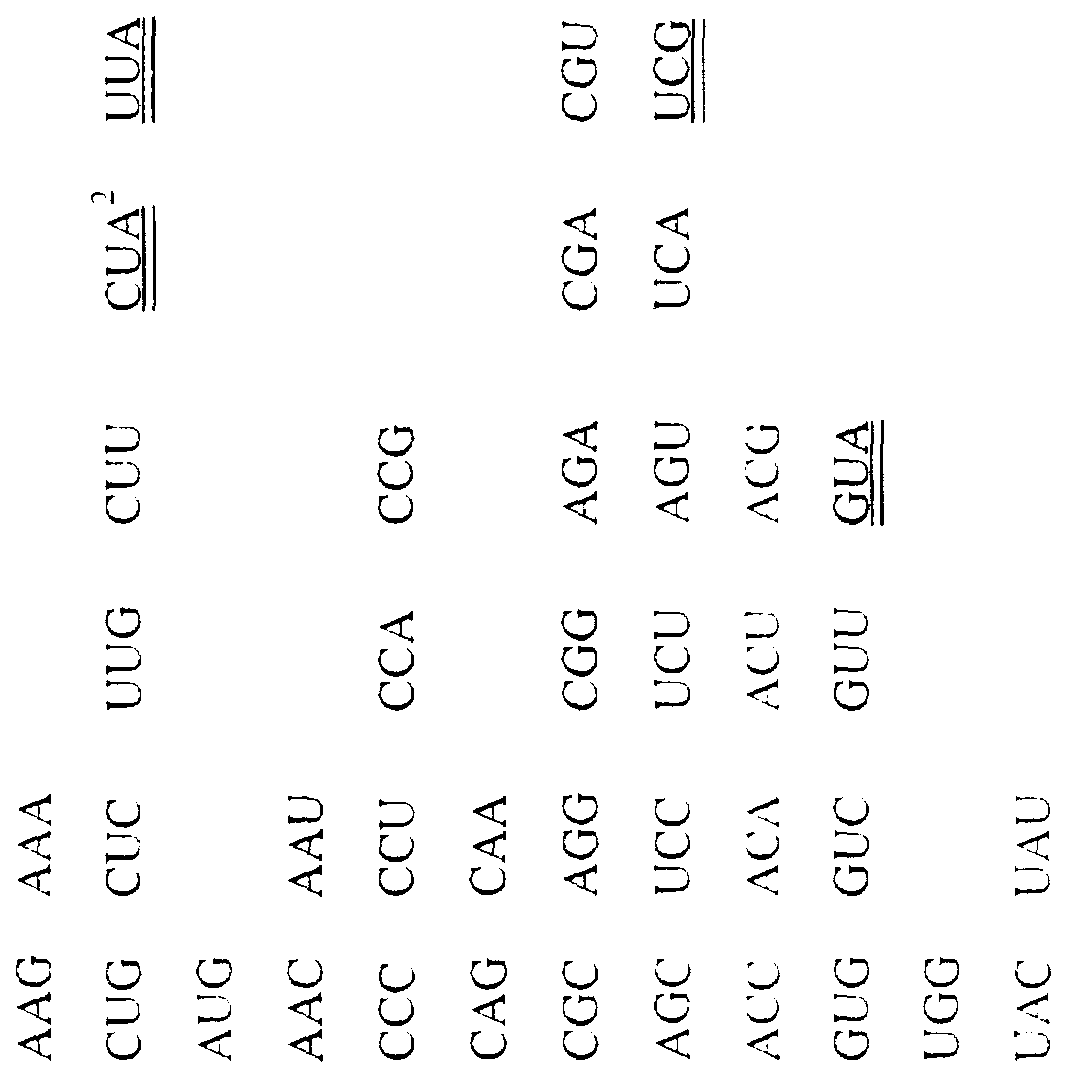 WO1998010734A2 - MsENOD40 PROMOTER COMPOSITIONS AND METHODS