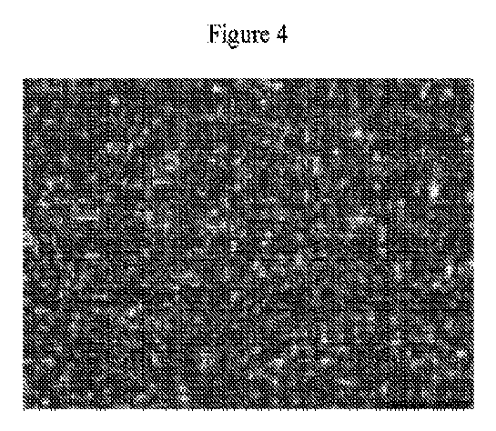 JP5918781B2 - 接着剤組成物およびその使用 - Google Patents