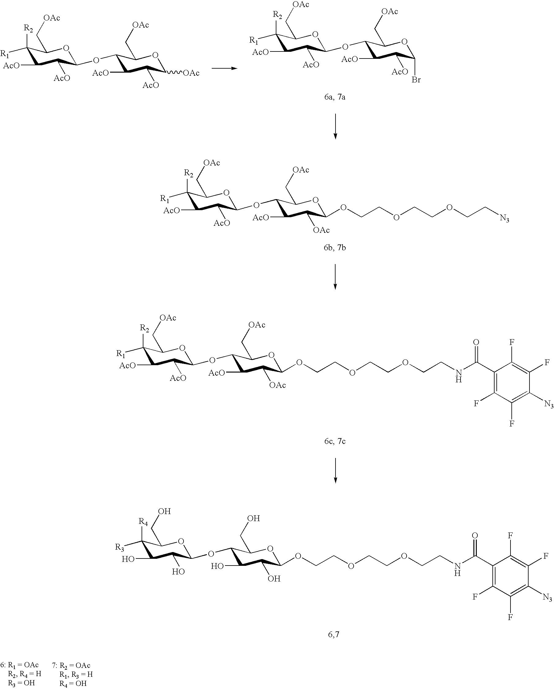 Figure US20100028559A1-20100204-C00021
