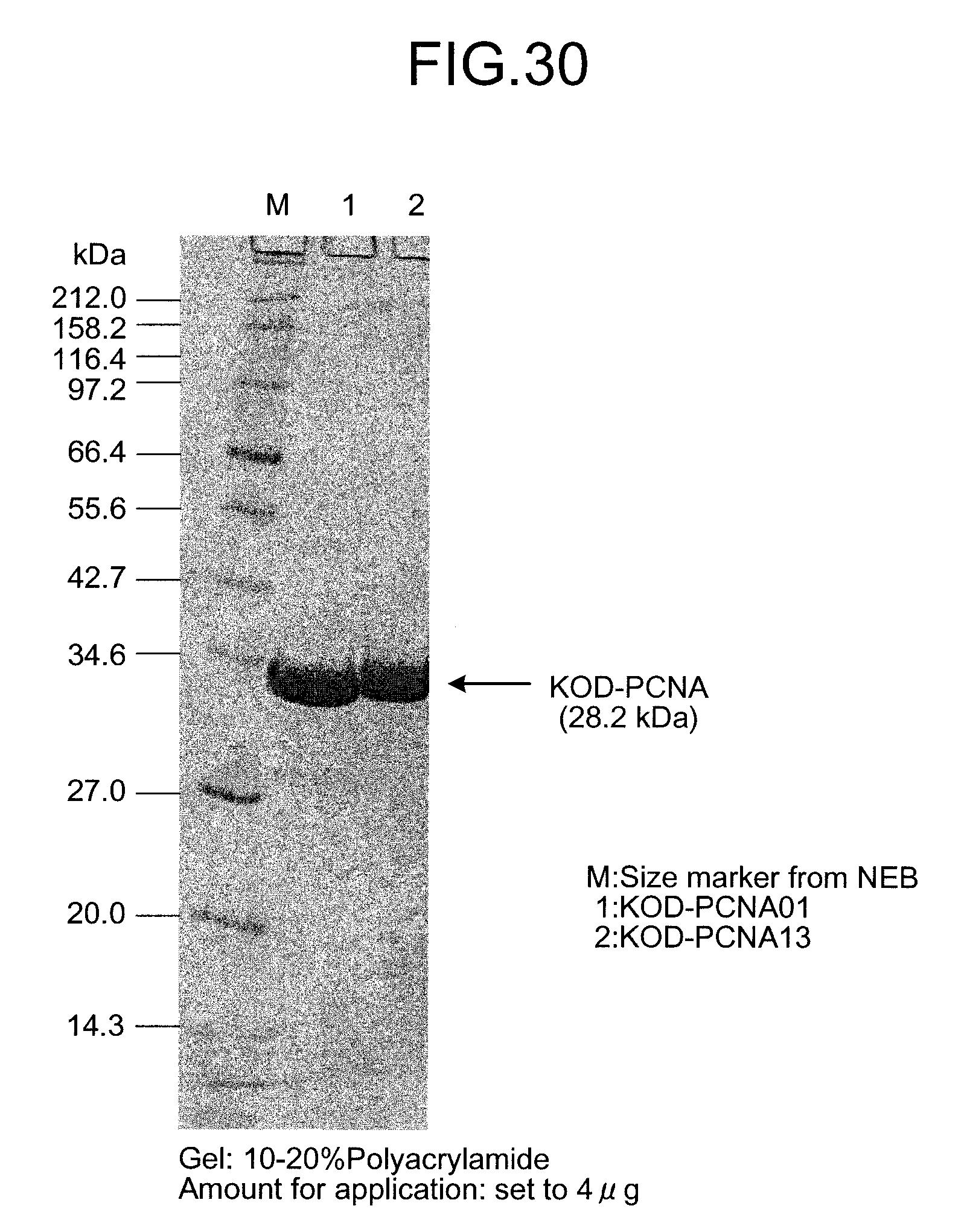 US8003346B2 - Mutant PCNA - Google Patents