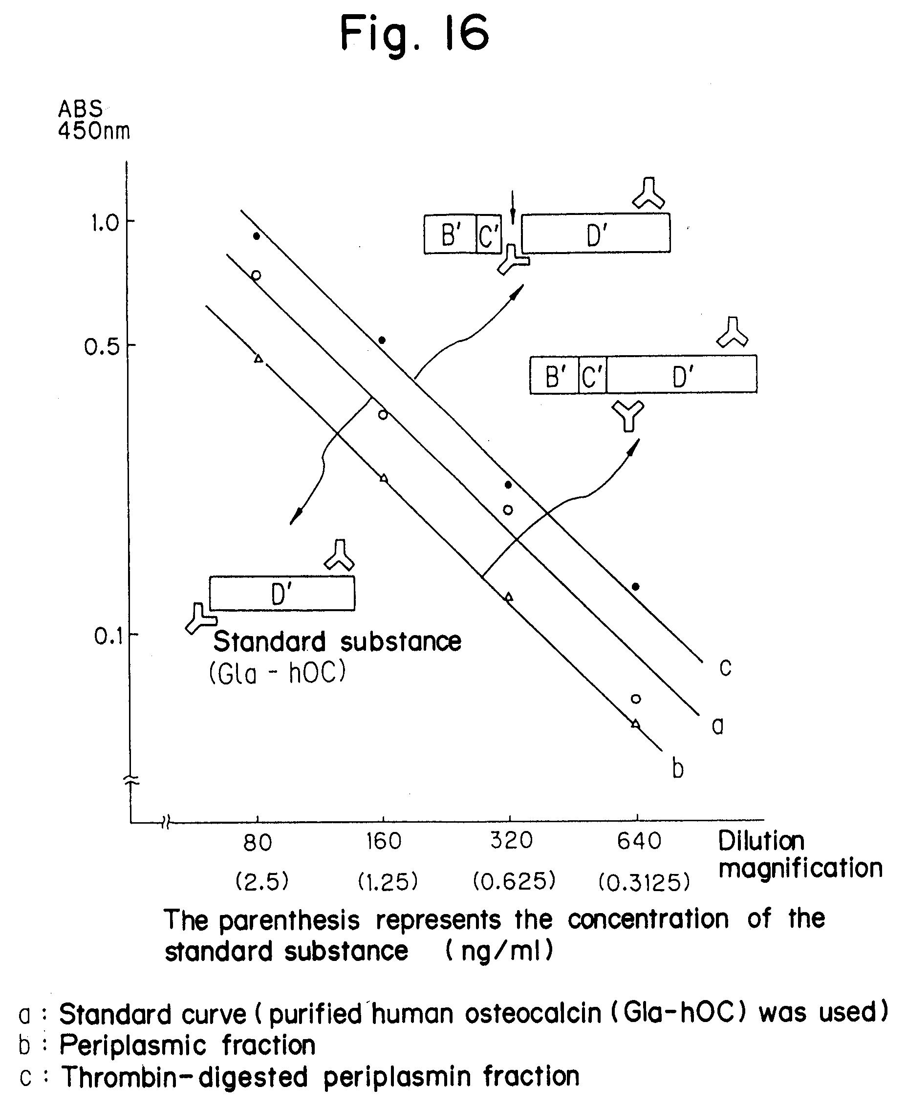EP0463571A2 - Recombinant human osteocalcin - Google Patents