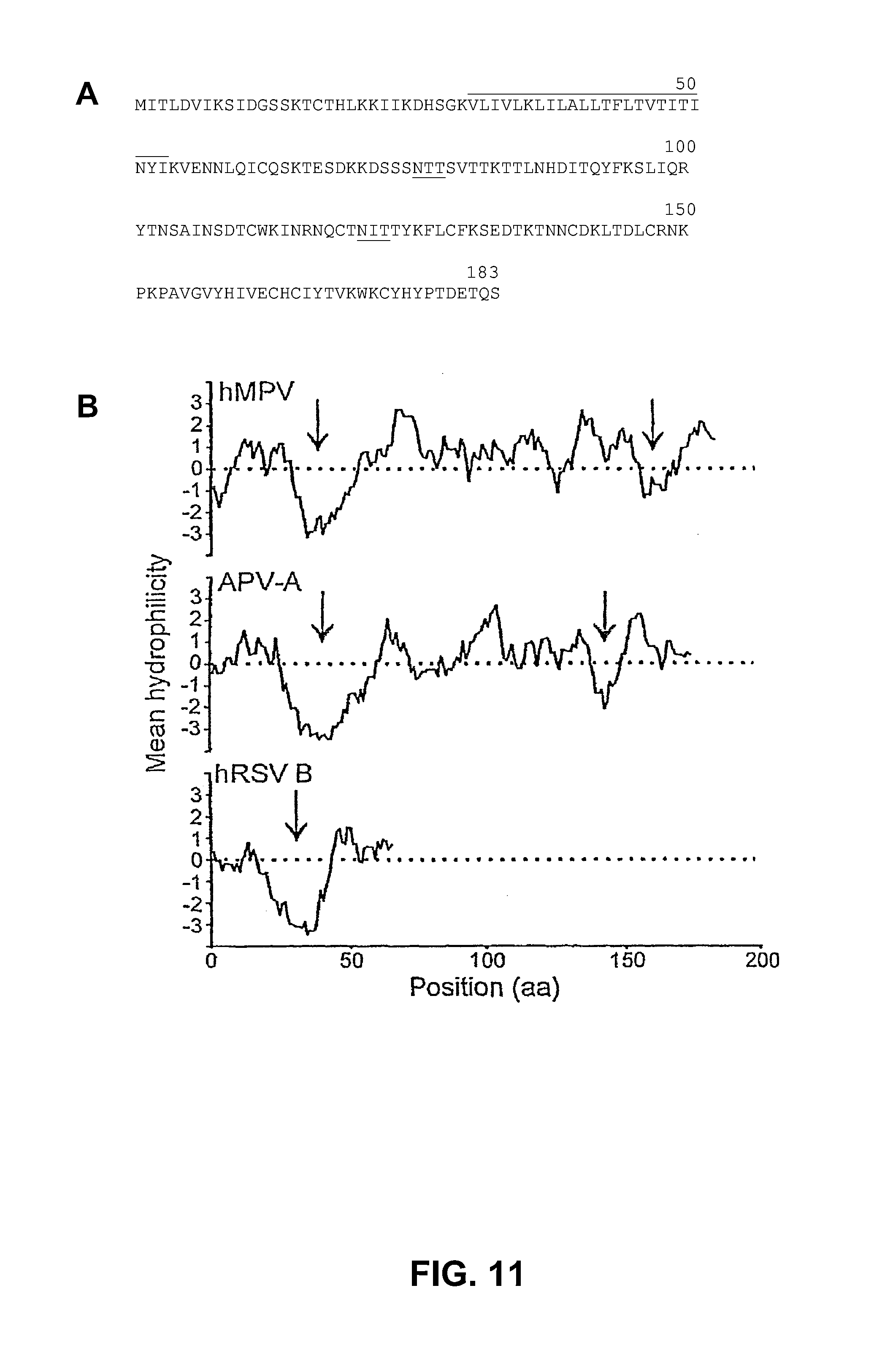Us20140370497a1 Metapneumovirus Strains And Their Use In Vaccine