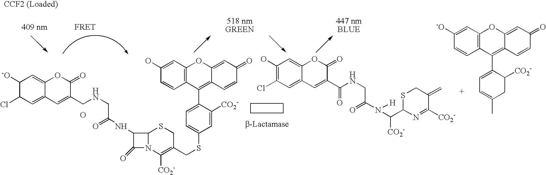 Us7598348b2 Adiponectin Receptor Variant Adipor2v2 Google Patents Brush Real Techniques Ori Usa Import