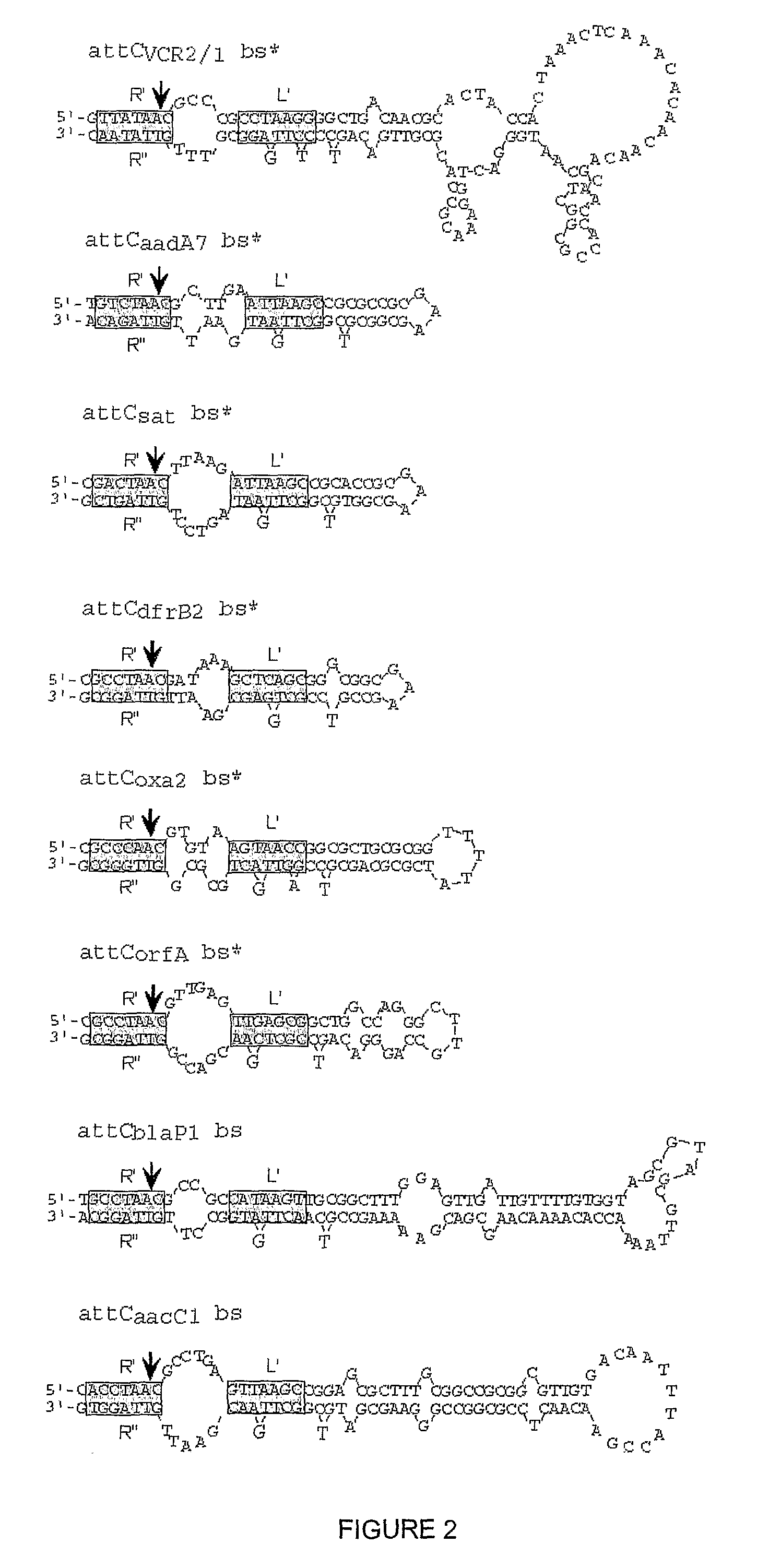 WO2007042944A2 - Crystal structure of a complex of integron