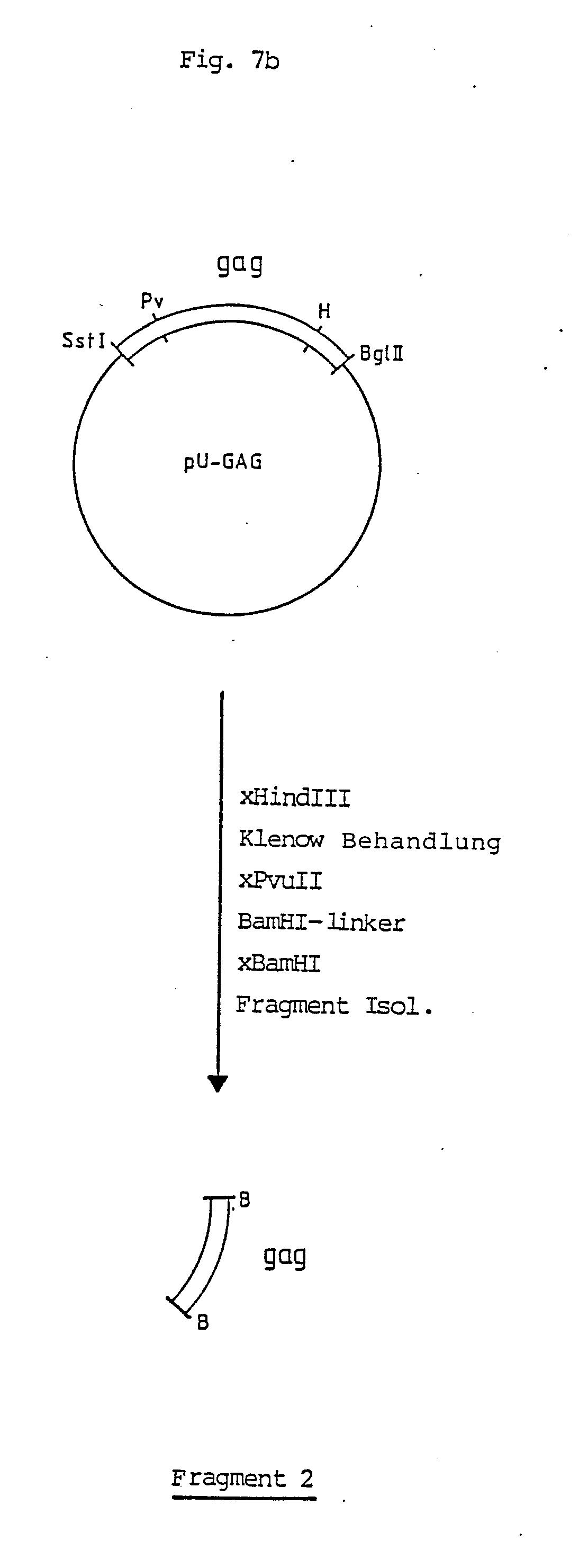 Niedlich 3 Phasiges Elektrisches Schaltbild Galerie - Schaltplan ...