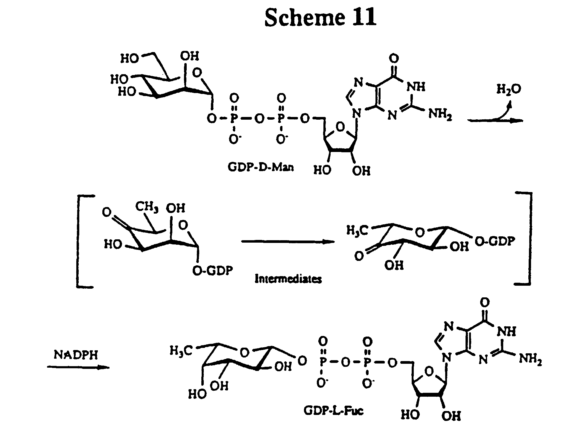 Thio oligosaccharides their synthesis and reactions with enzymes continuity hypothesis attachment