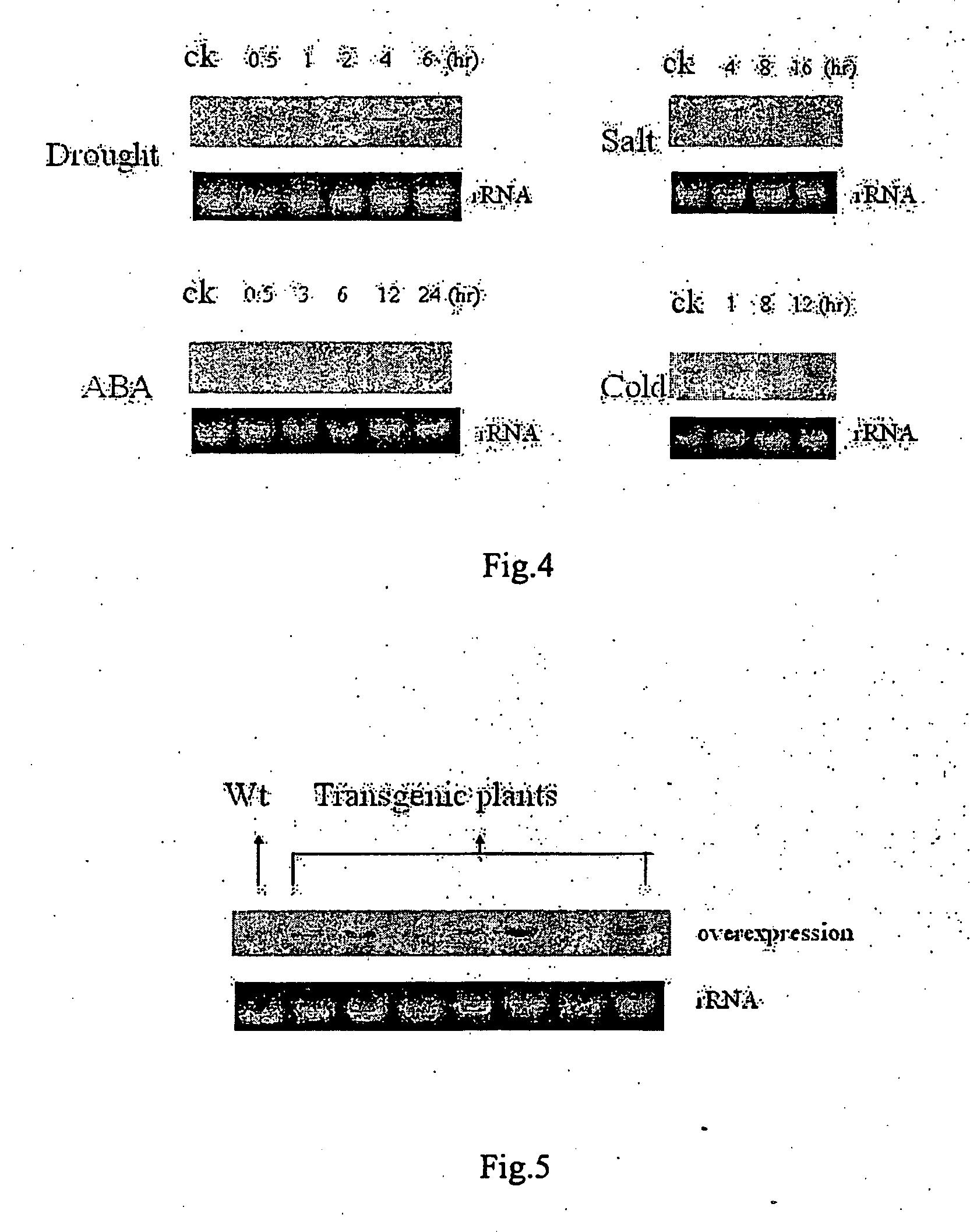patent ep1835028b1 transkriptionsfaktor gen osnacx aus reis und verwendung davon zur. Black Bedroom Furniture Sets. Home Design Ideas