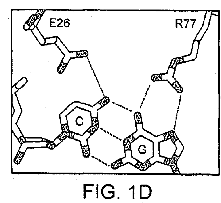 Patent Ep2368981a2
