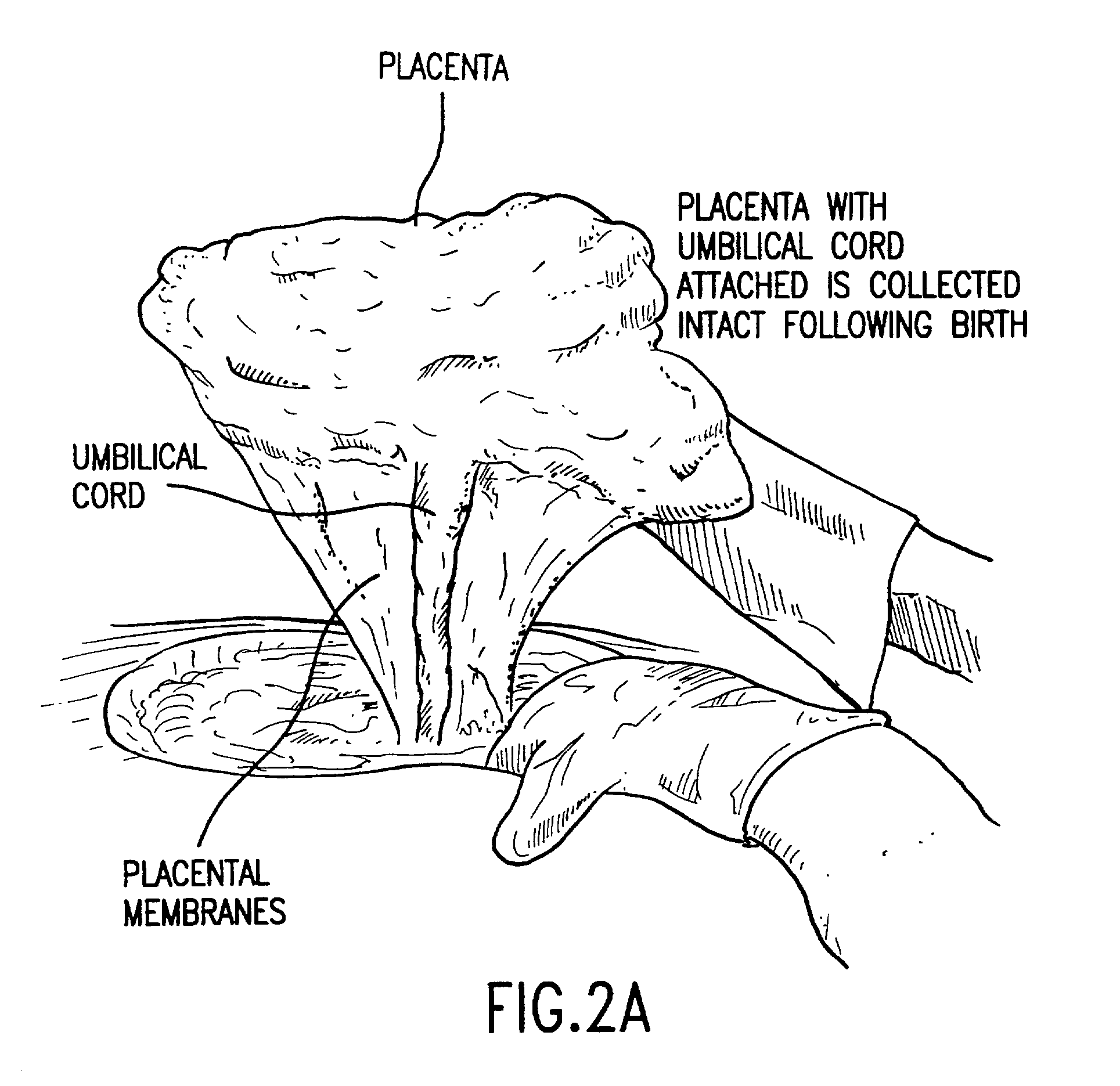 how to use melsmon placenta