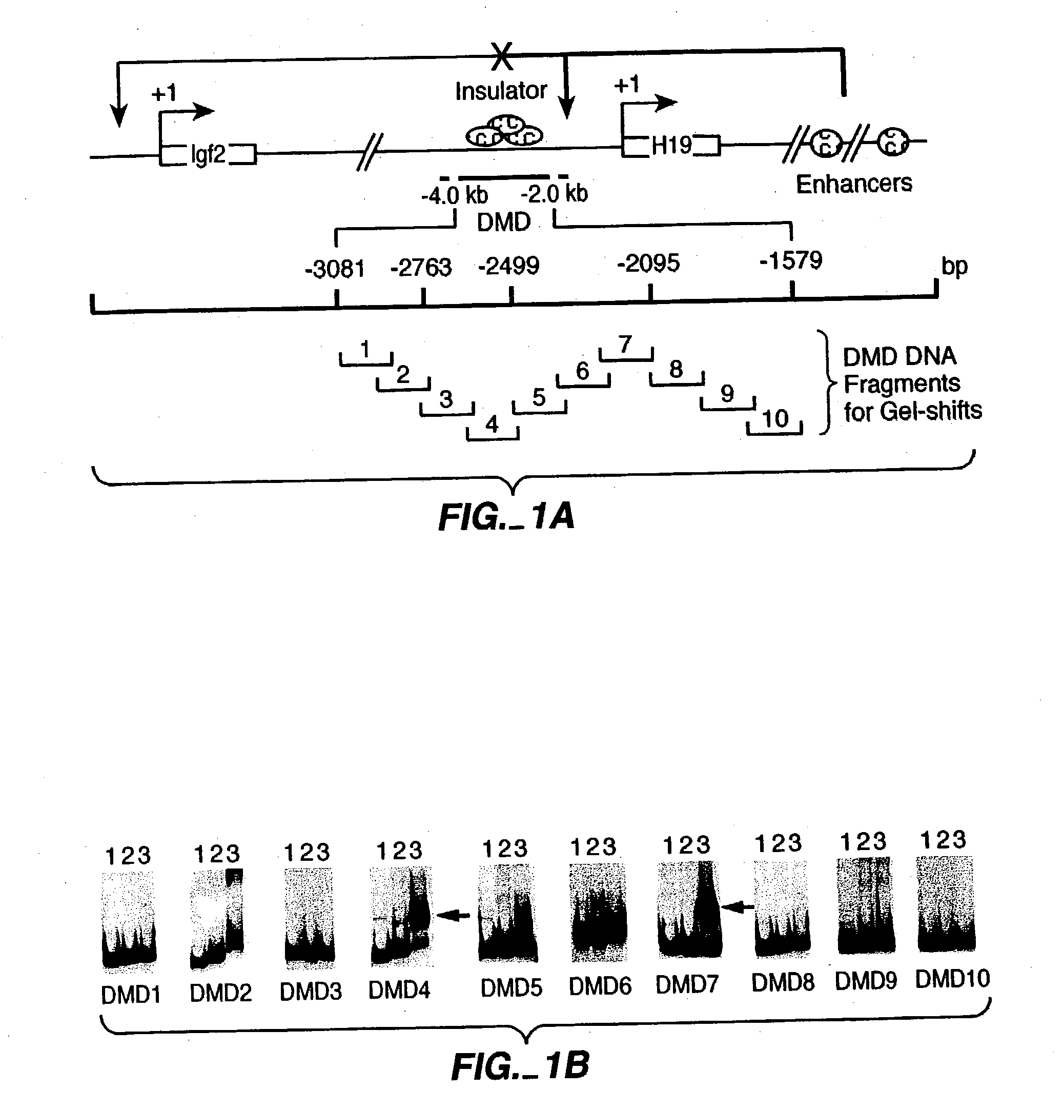 Patent US20030232781 - Modulation of gene expression using