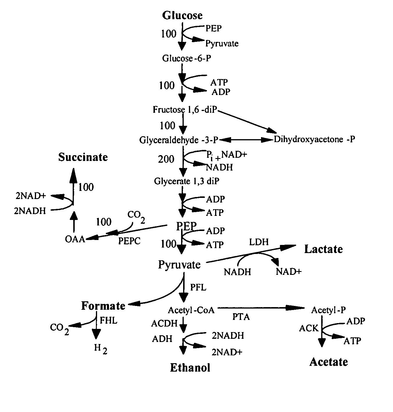 Dieta mediterránea pelicula