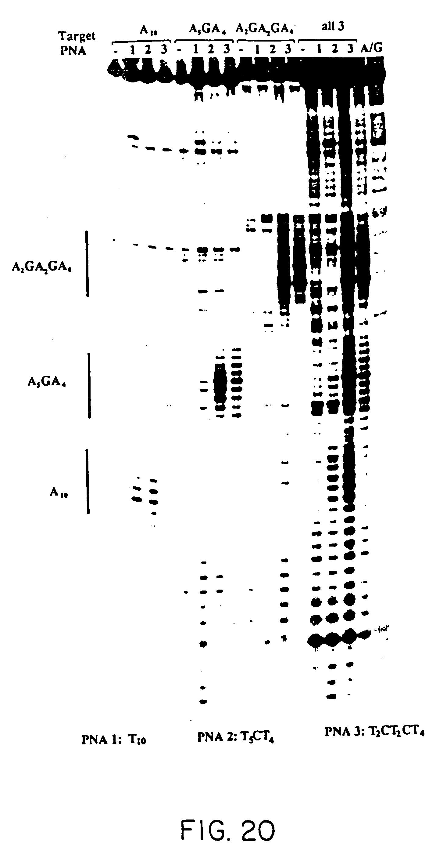 Voorbeeld thesis kuleuven psychologie image 1