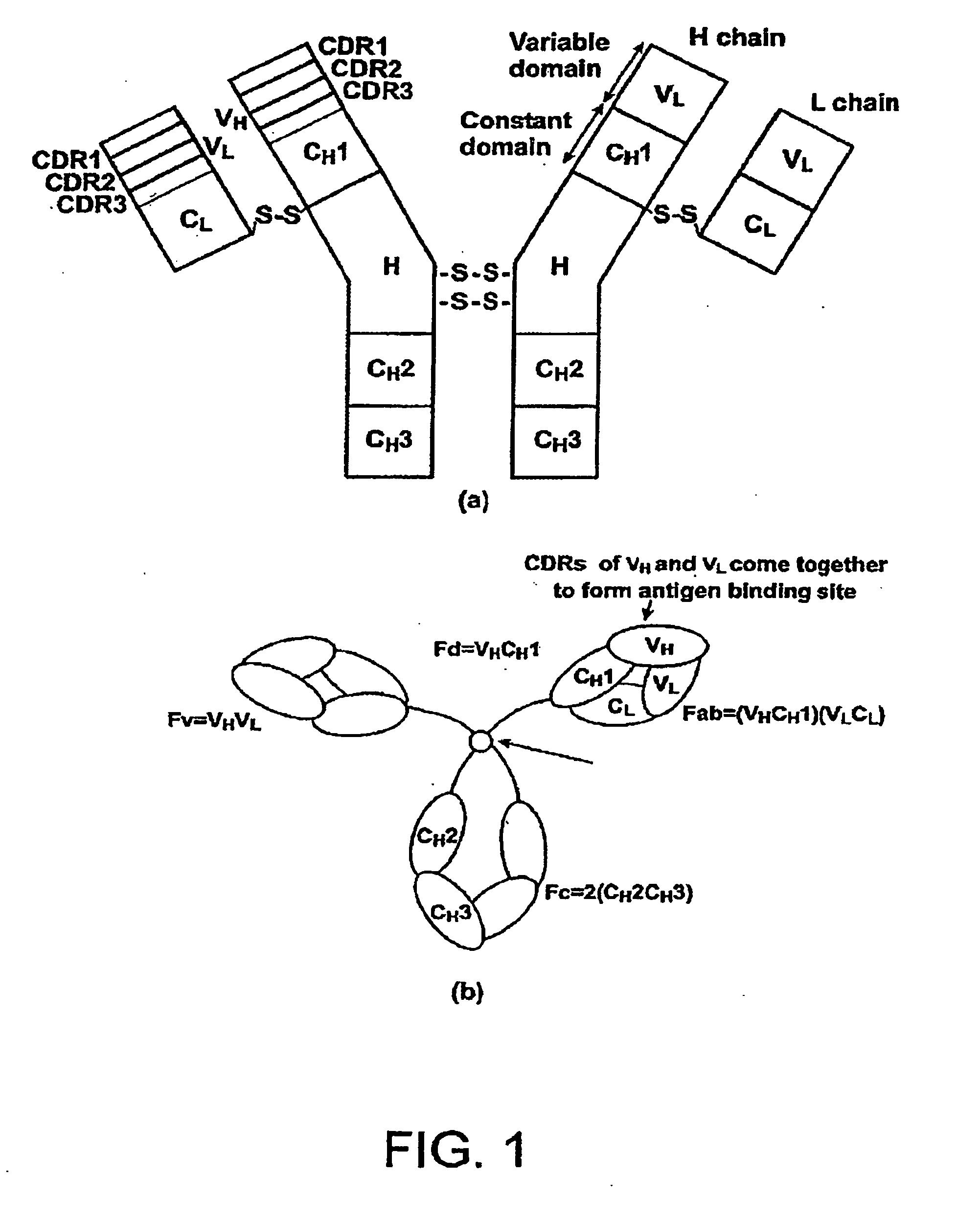 Single-domain Antigen-binding
