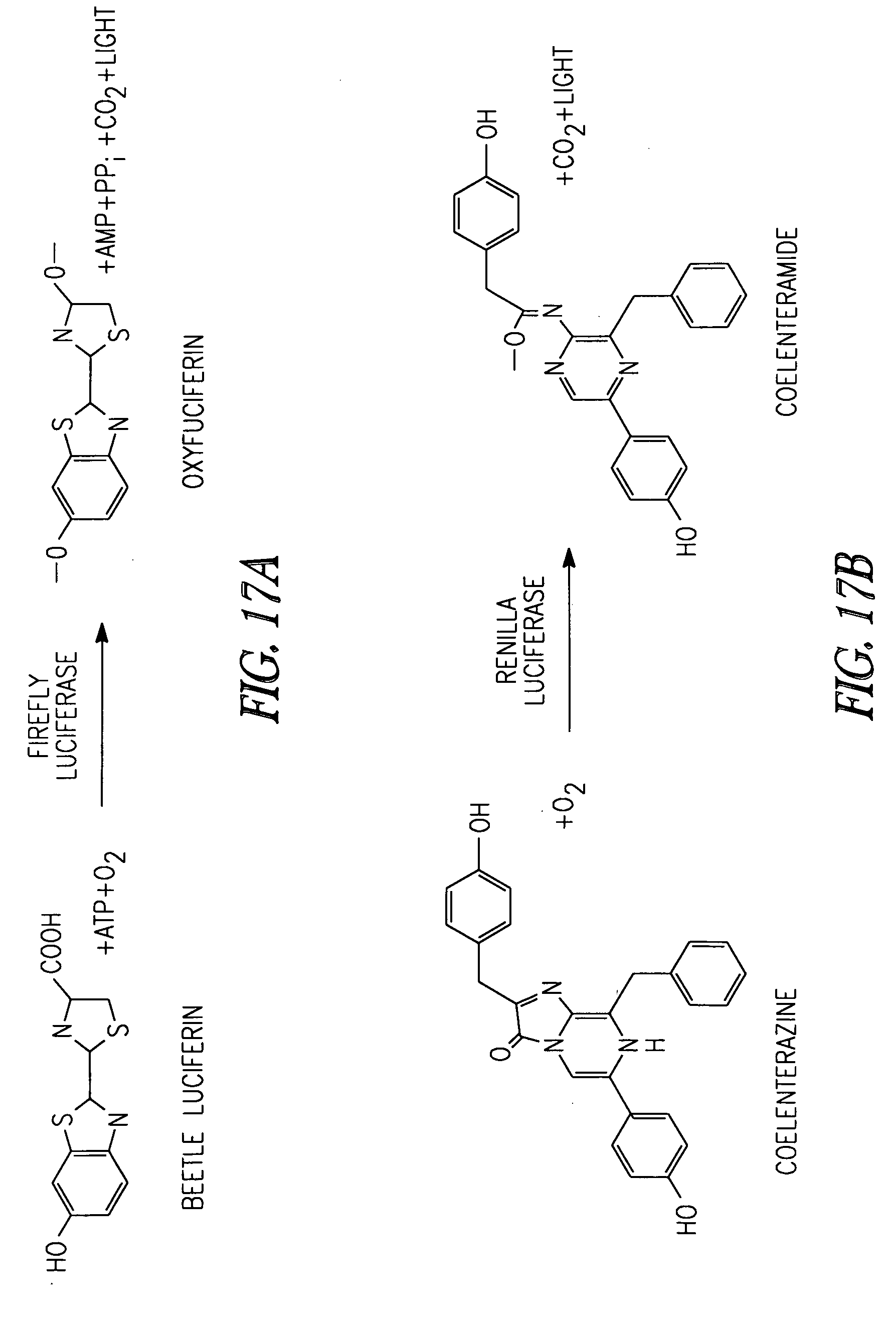Patent US20080090291 - Synthetic nucleic acid molecule ...