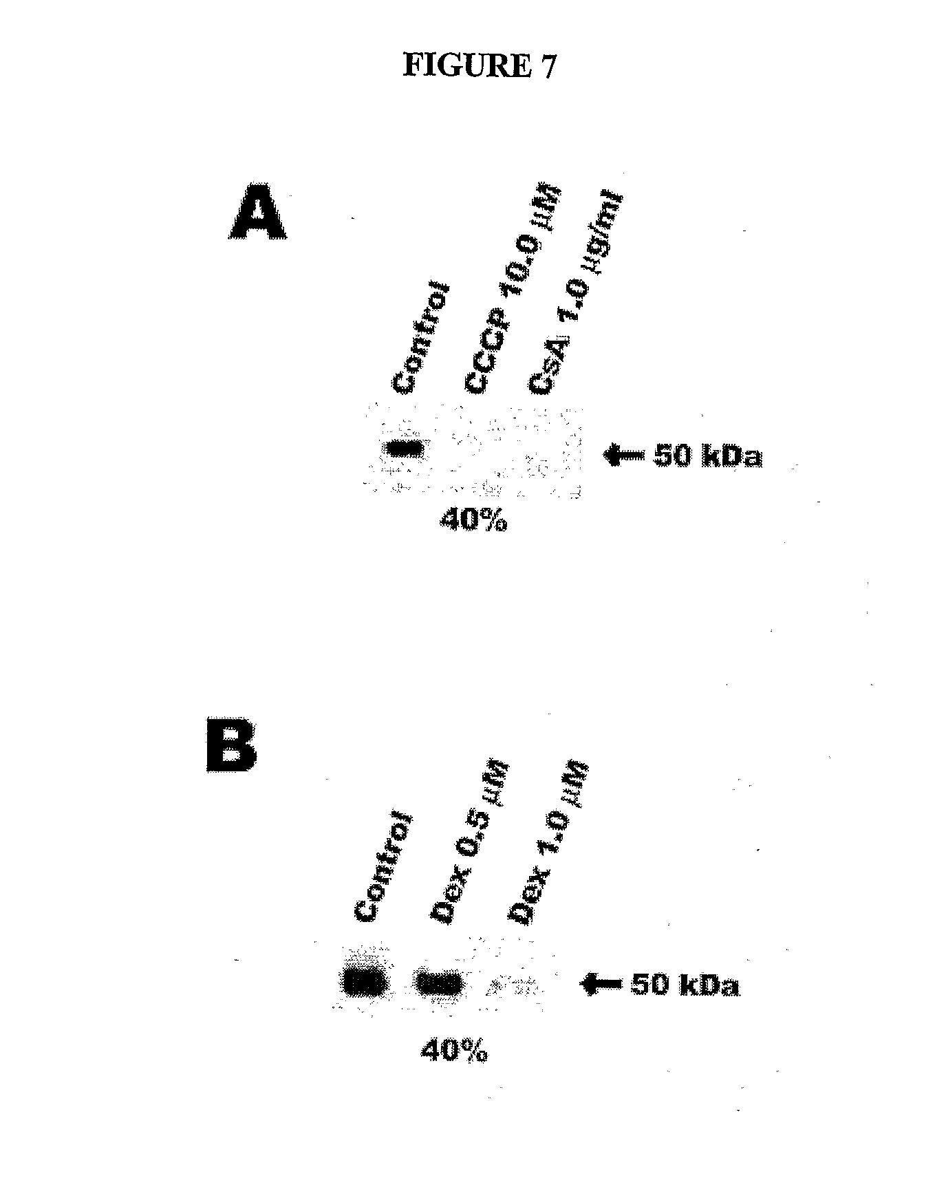 neutrophils marker