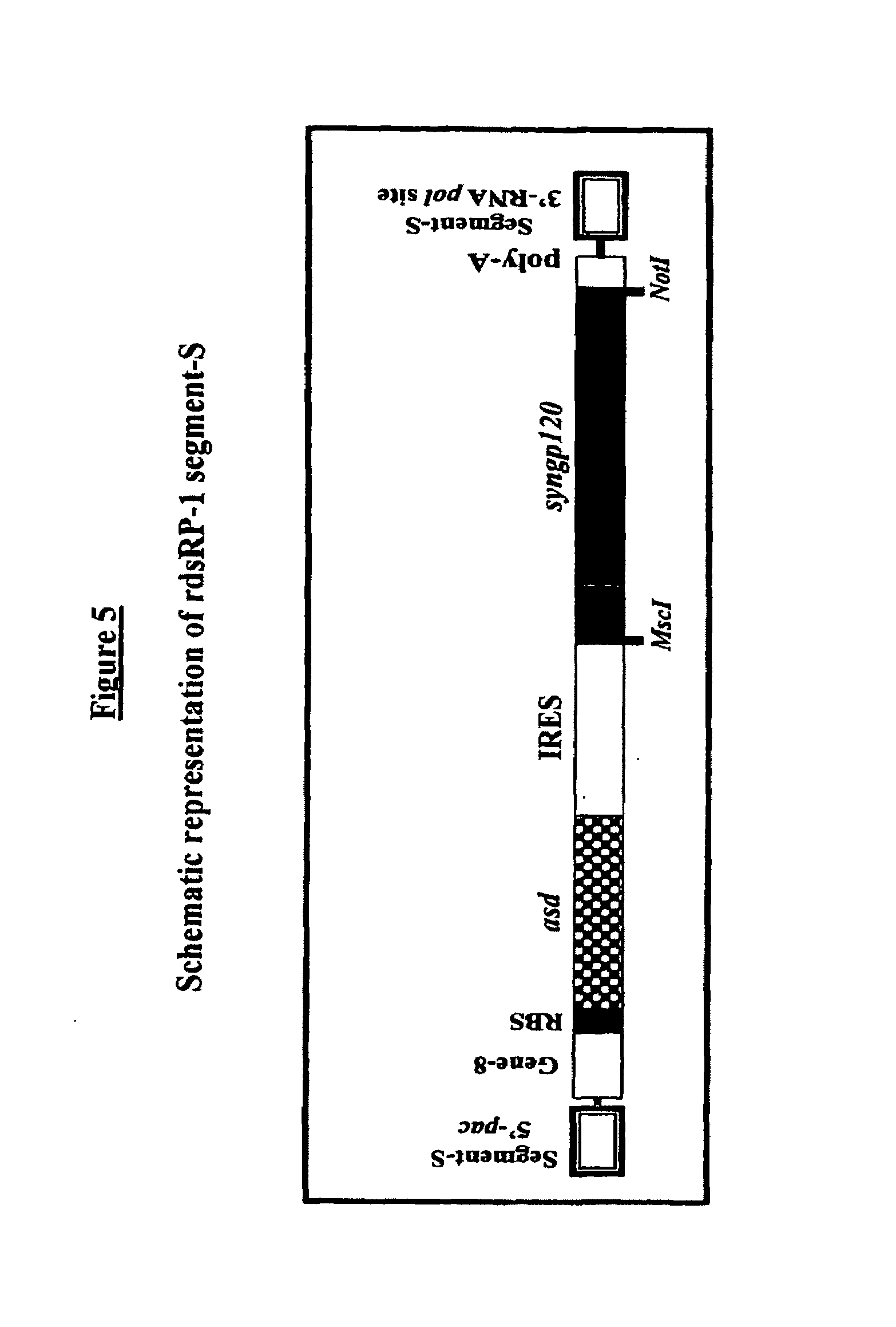Patente Us20090305398 Recombinant Double Stranded Rna Phage And 1985 Morgan Wiring Diagram Schematic Patent Drawing