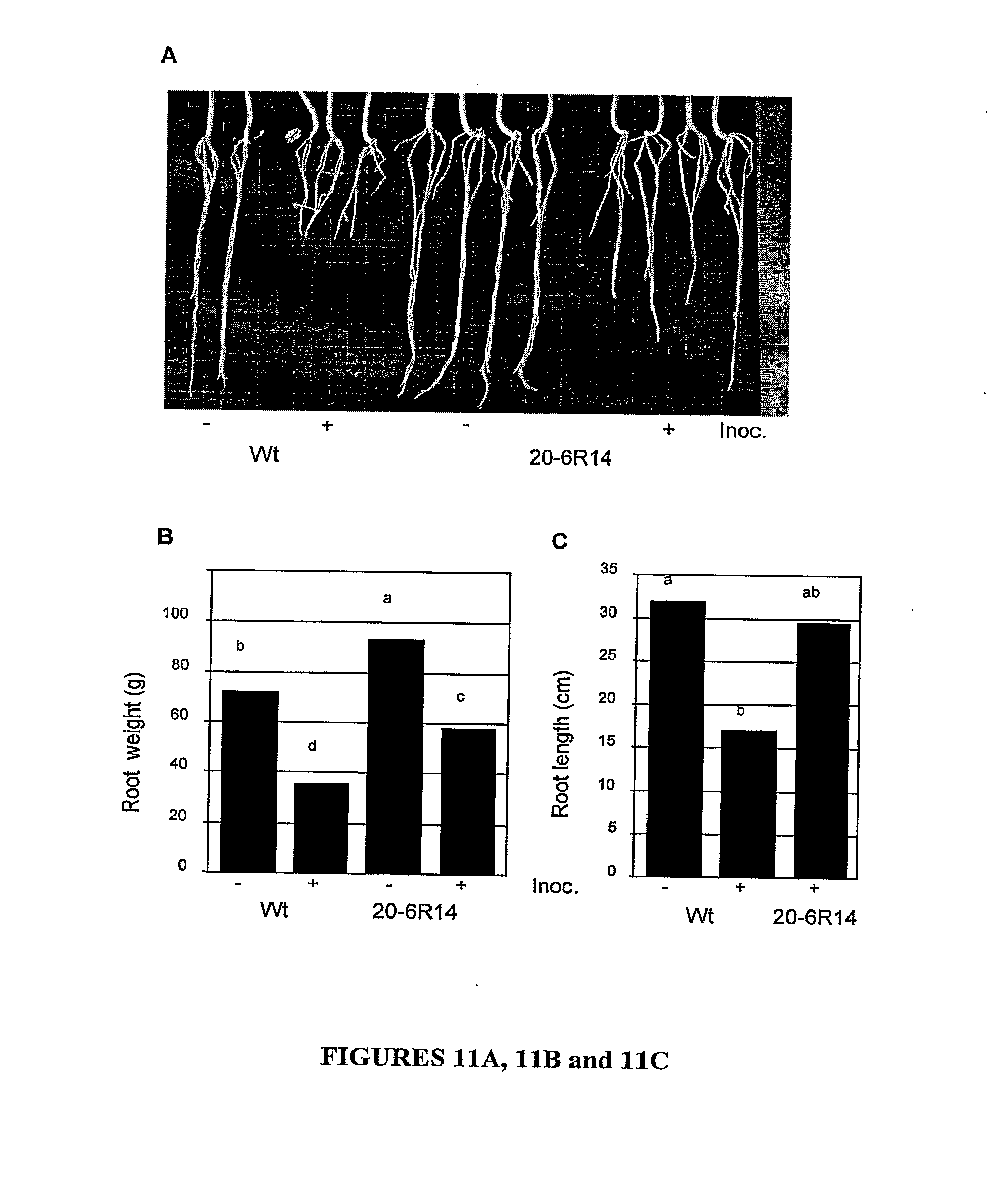 Patent US20090320152 - Mutation breeding for resistance to