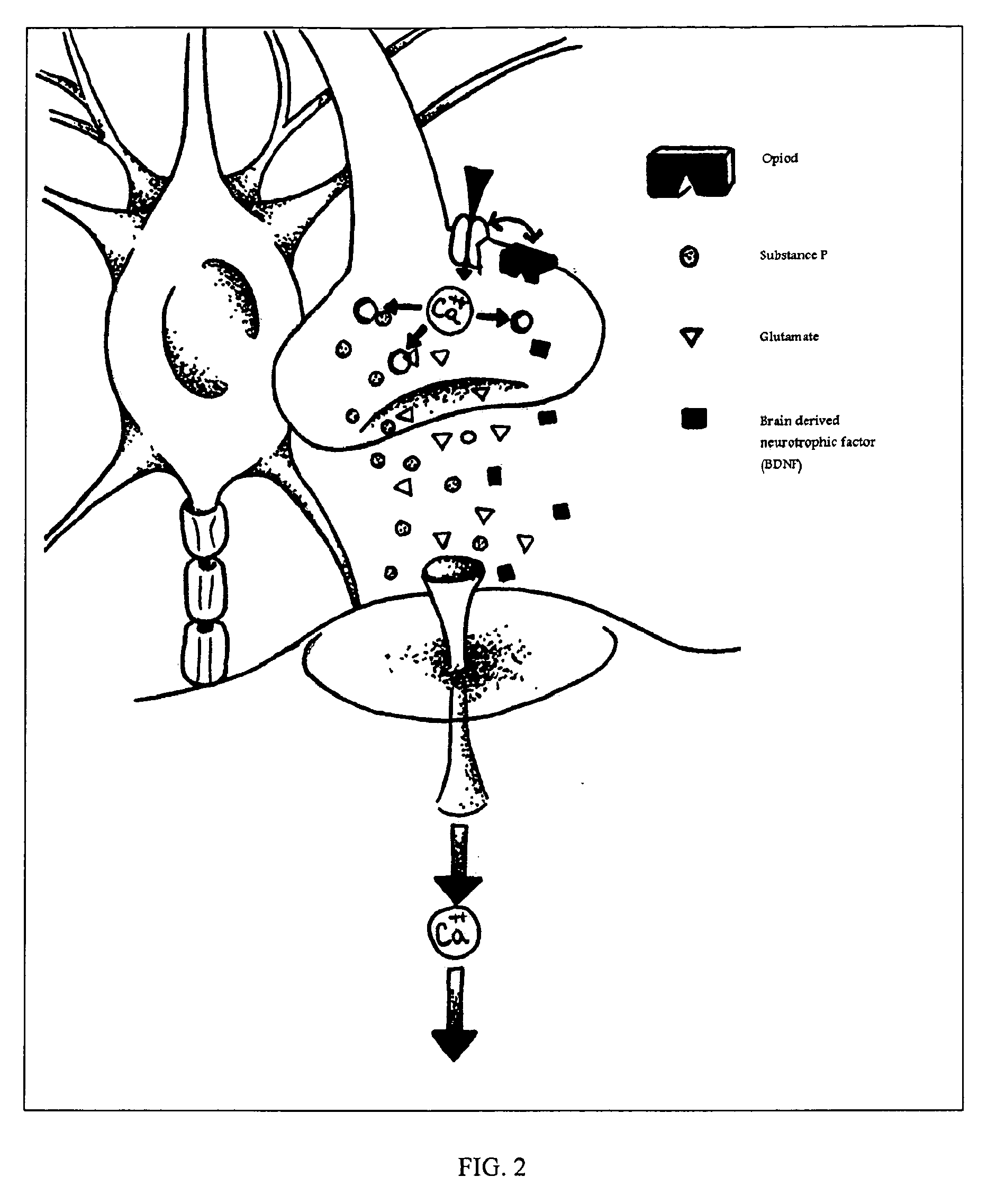 kamagra sildenafil citrate 100mg