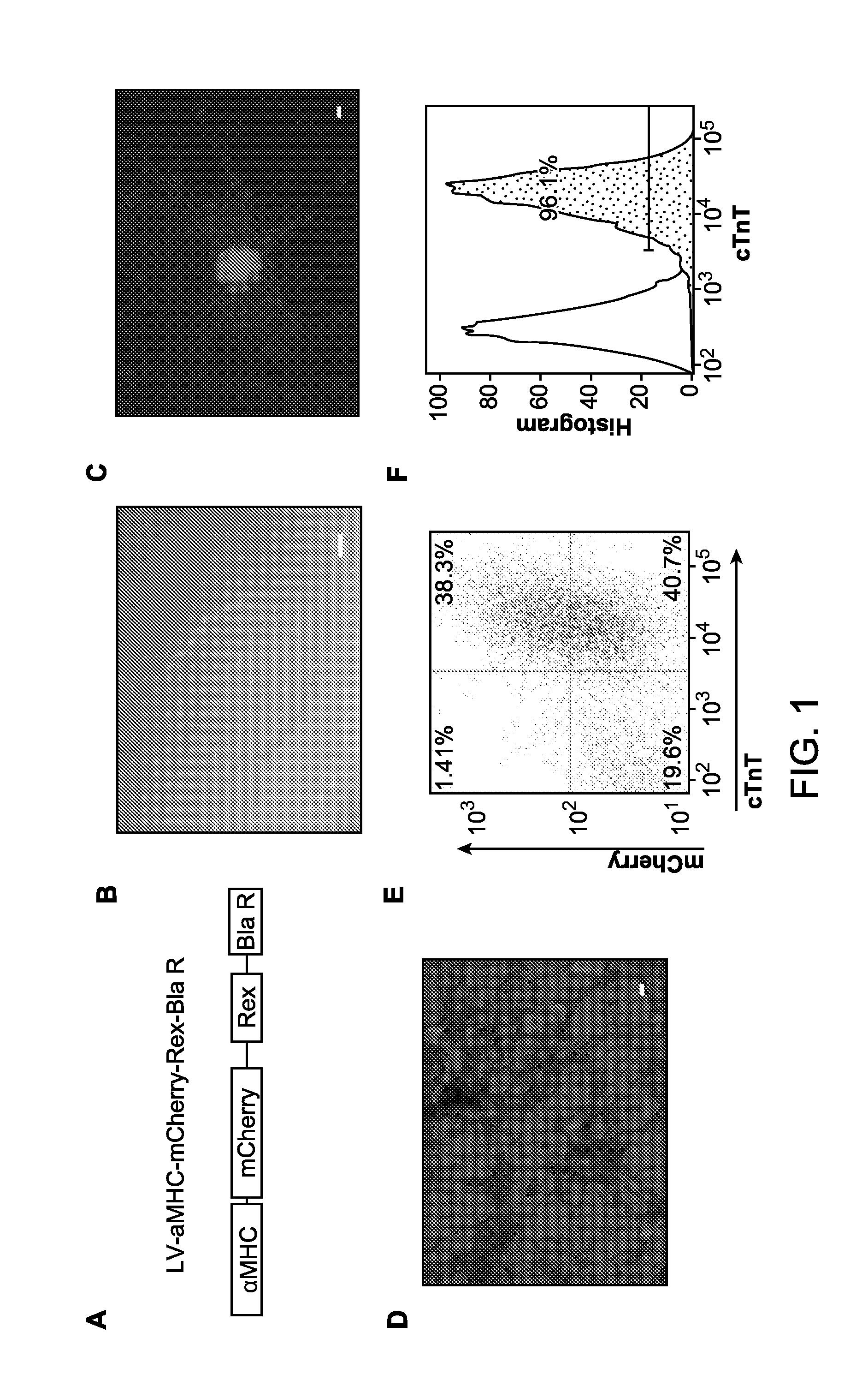 Patente Us20140301991 Methods For Generating Cardiomyocytes