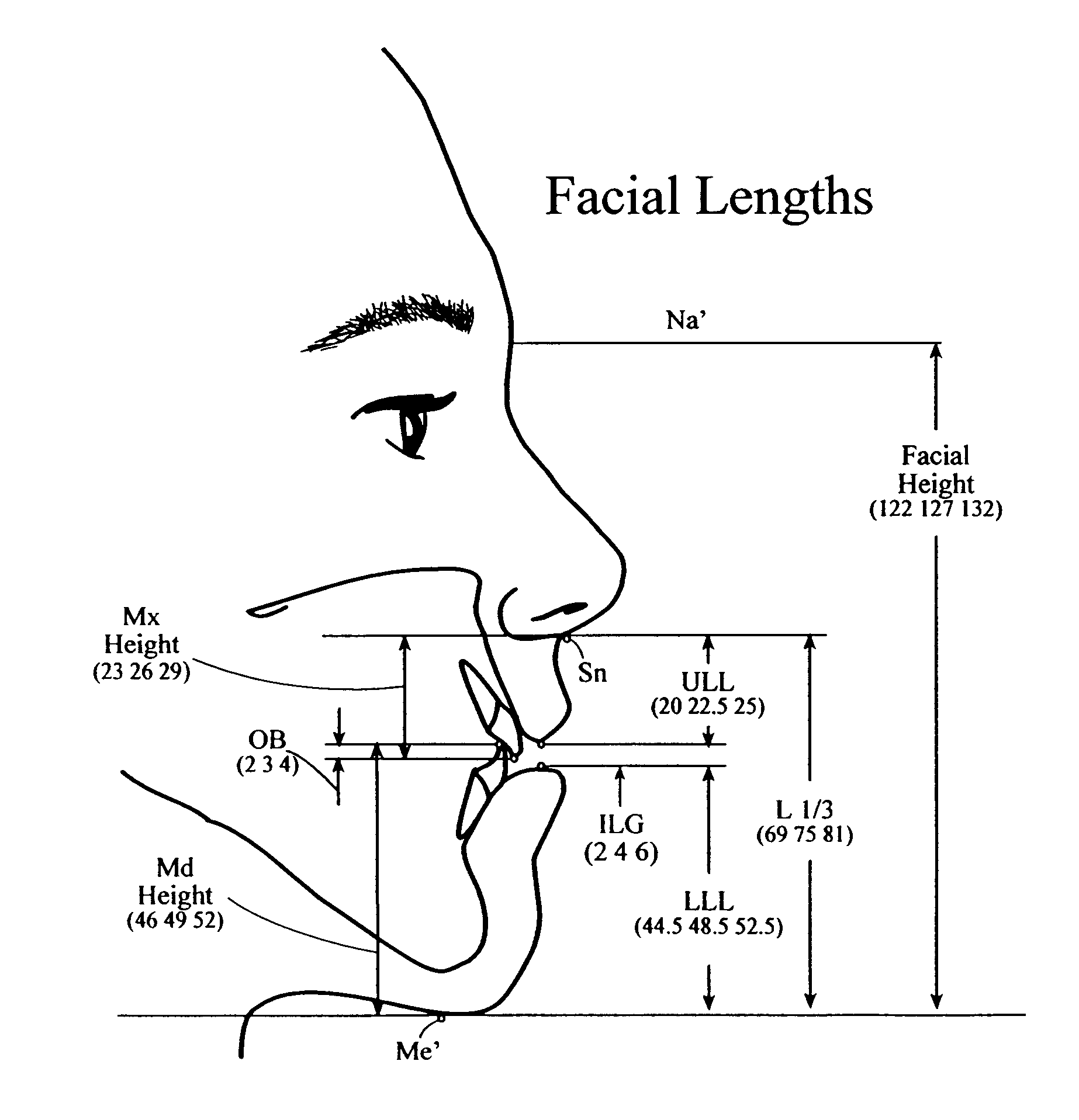 patent us gender specific soft tissue cephalometric patent drawing