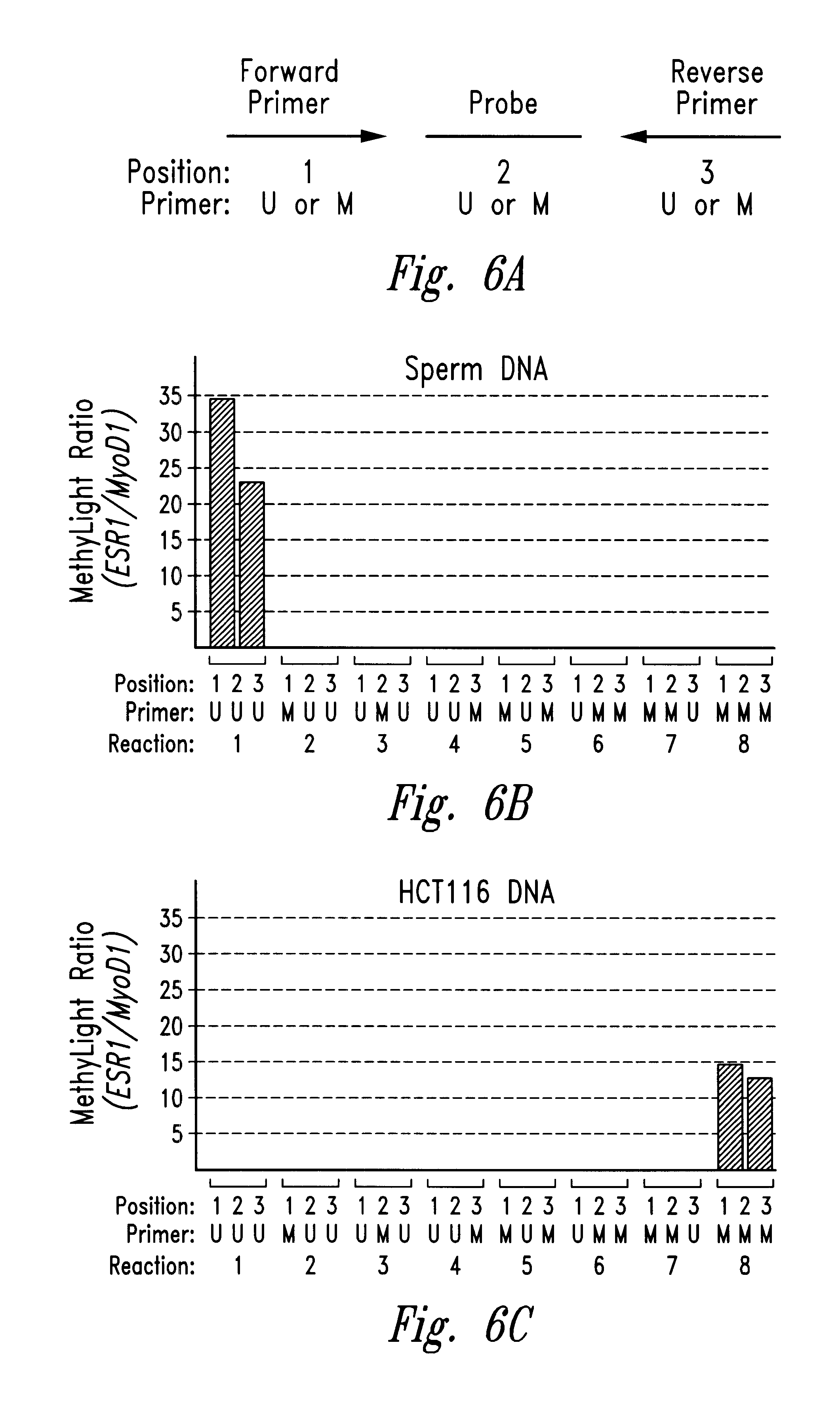 an analysis of the process of dna electrophoreses Gel electrophoresis in dna fragments analysis 41 seow ven lee and  finally,  i am grateful to ms martina durovic (publishing process manager) and all the.