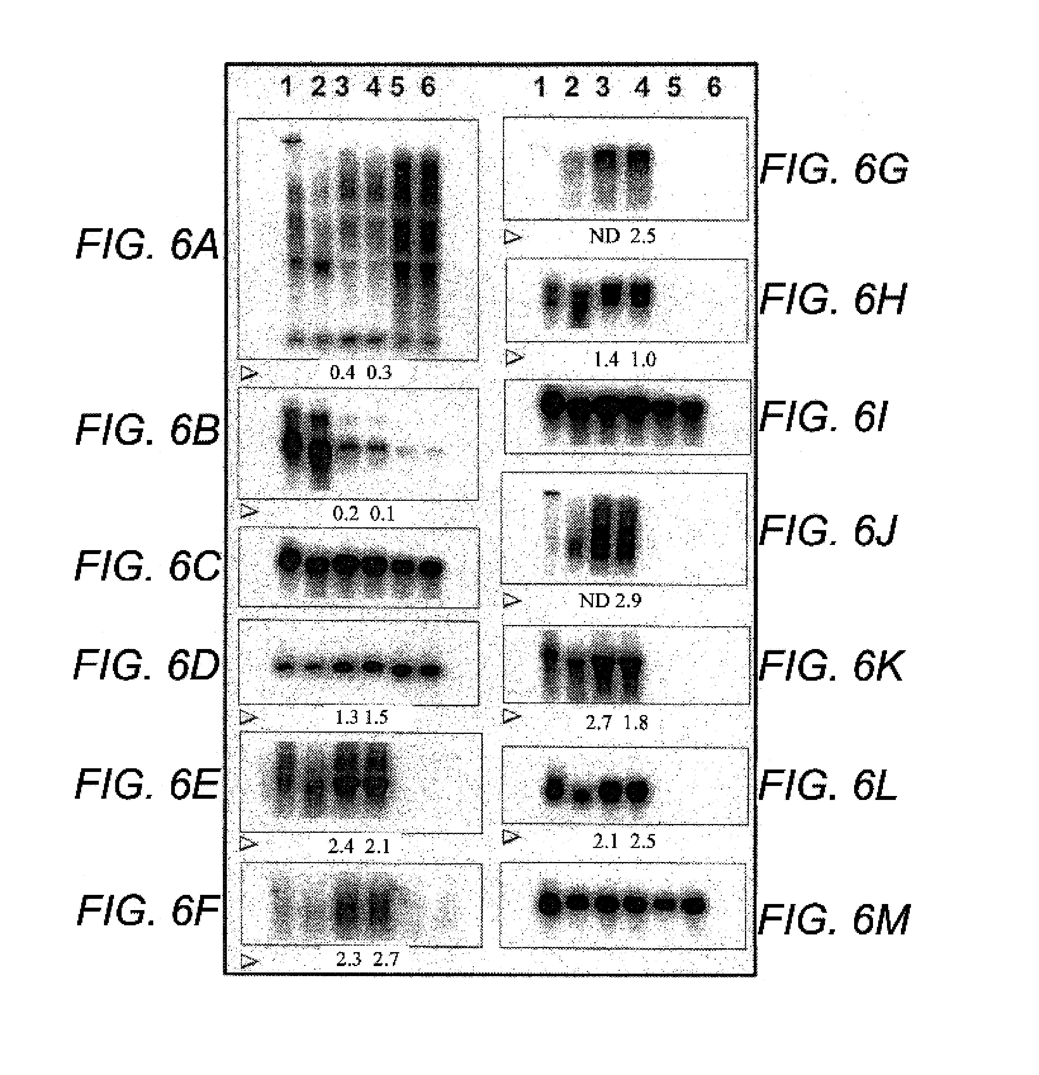 Patent Us7442390 Method For Enhancing Engraftment Of Cells Using