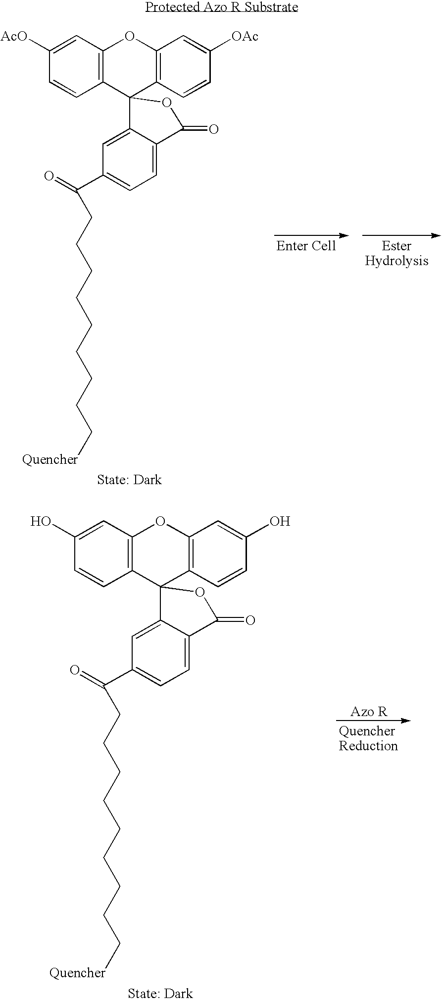 Figure US07635598-20091222-C00007