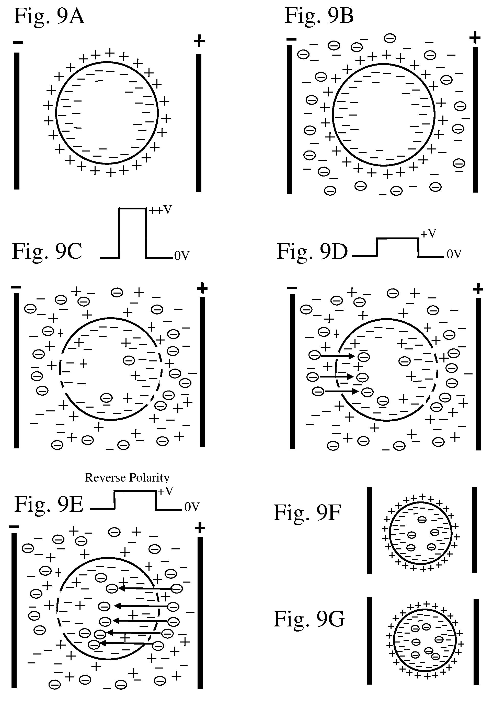 patent us7668592