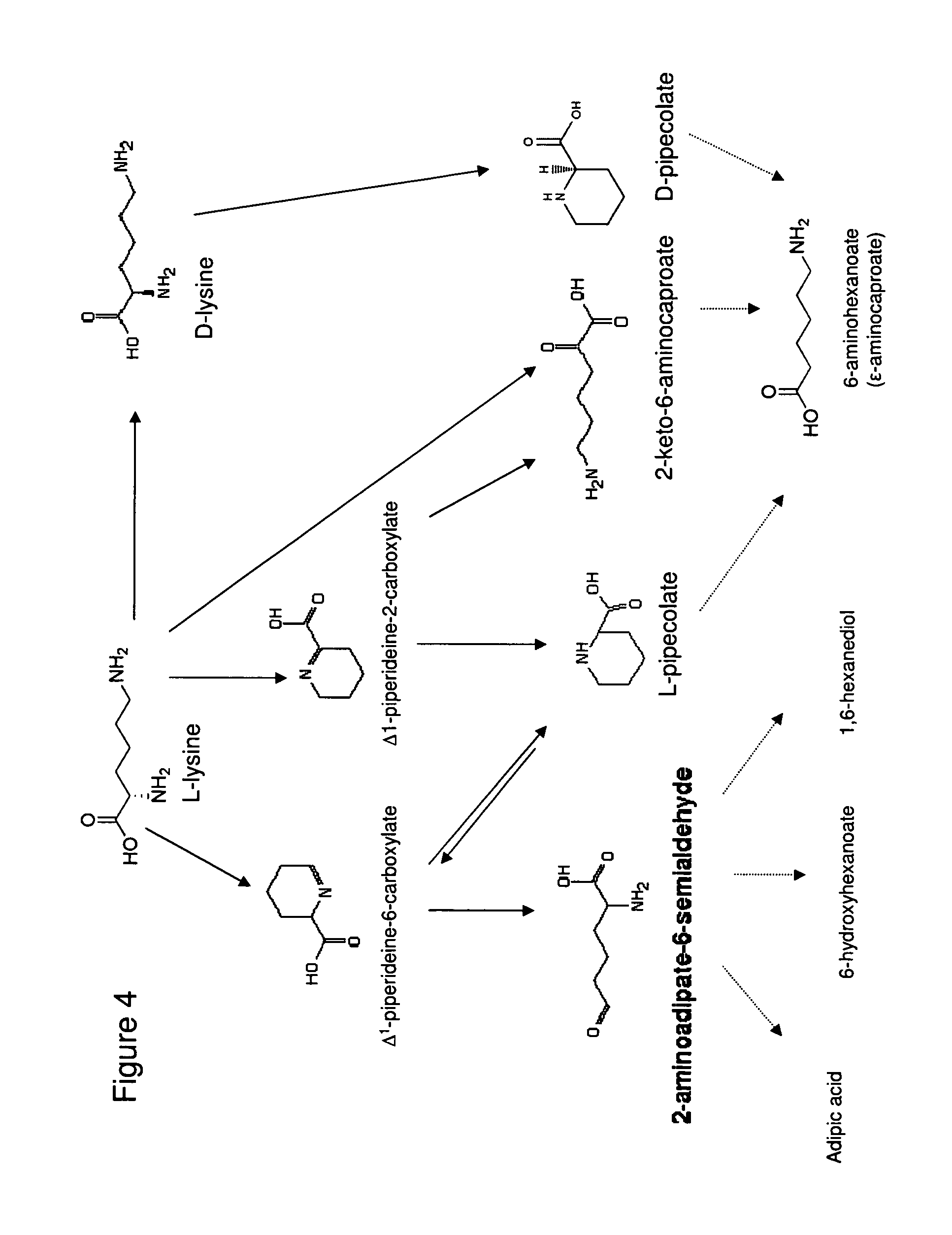 synthesis of caproic acid Hexanoic anhydride hexanoic acid, 1,1'-anhydride  poly(l-lactide) as  macroinitiator for the synthesis of poly(l-lactide)-b-poly(l-lysine) block  copolymer.