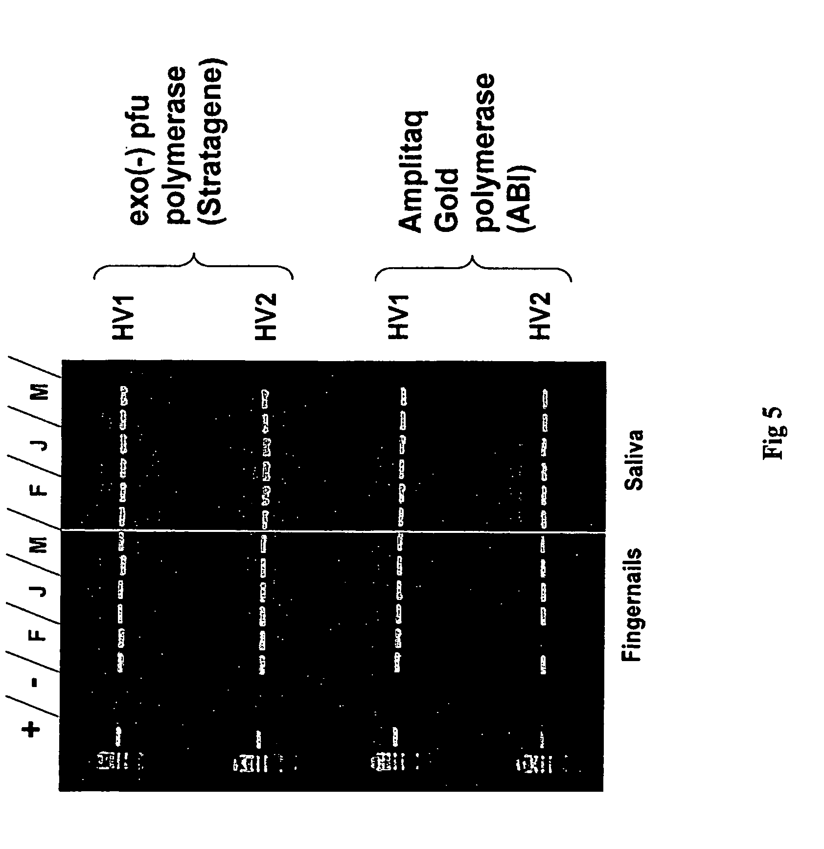 an analysis of gene patenting in the dna of gmos The wish to analyze and share such an important issue is at the origin of this   cisgenic techniques (genes introduced into the dna of the plant come from the  same  on the other hand, in the case of gmos, legal patent protection  prevents.