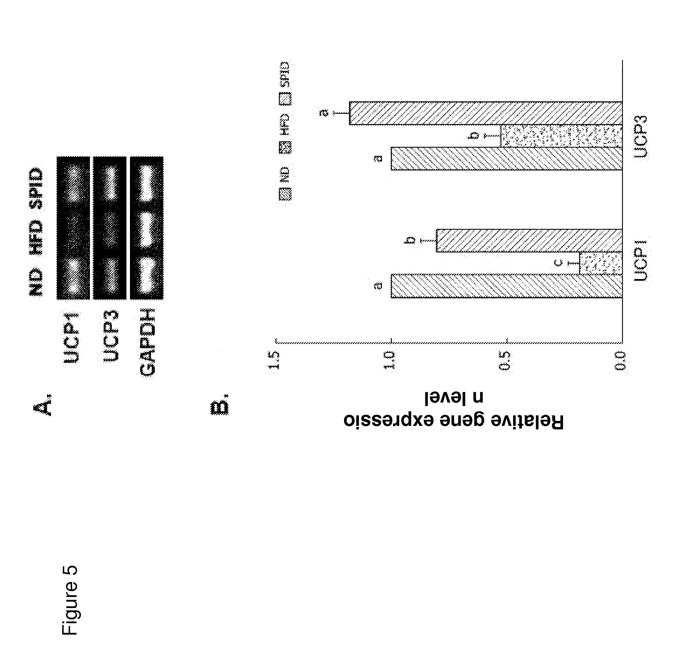 glucophage metformin