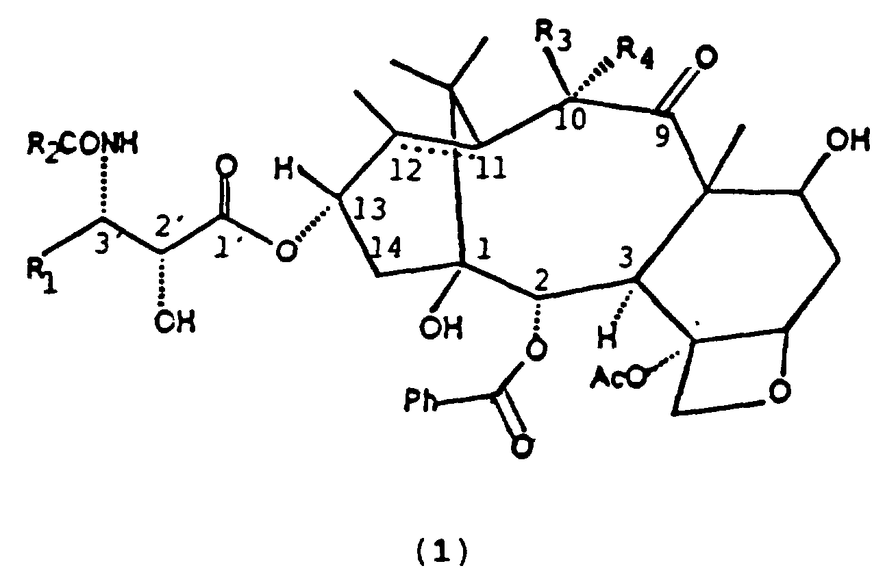Taxol semisynthesis