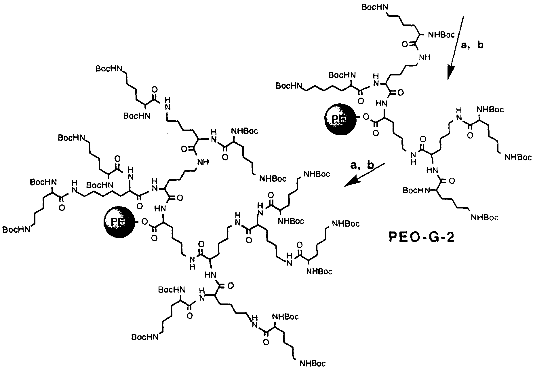 Wo1998012228a1 Polymers Containing Polysaccharides Such