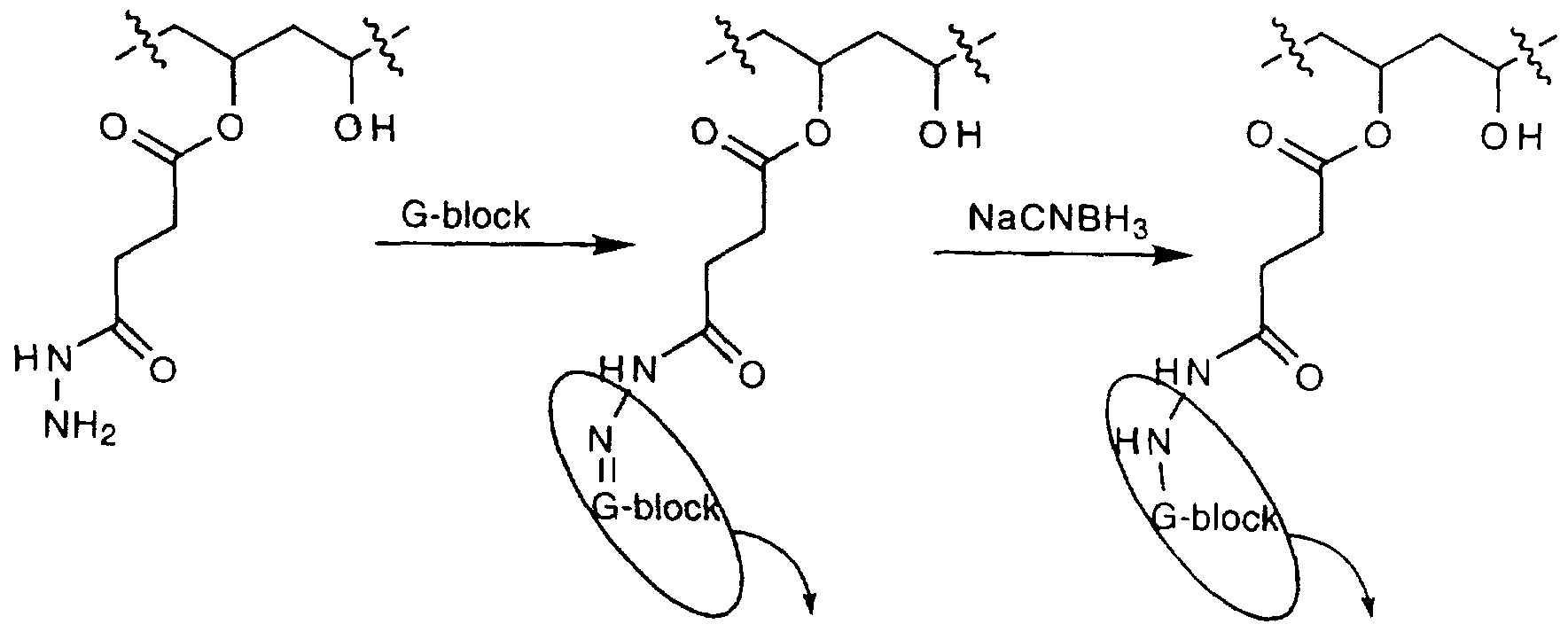 relationship between monomers and polymers using polysaccharides as an example