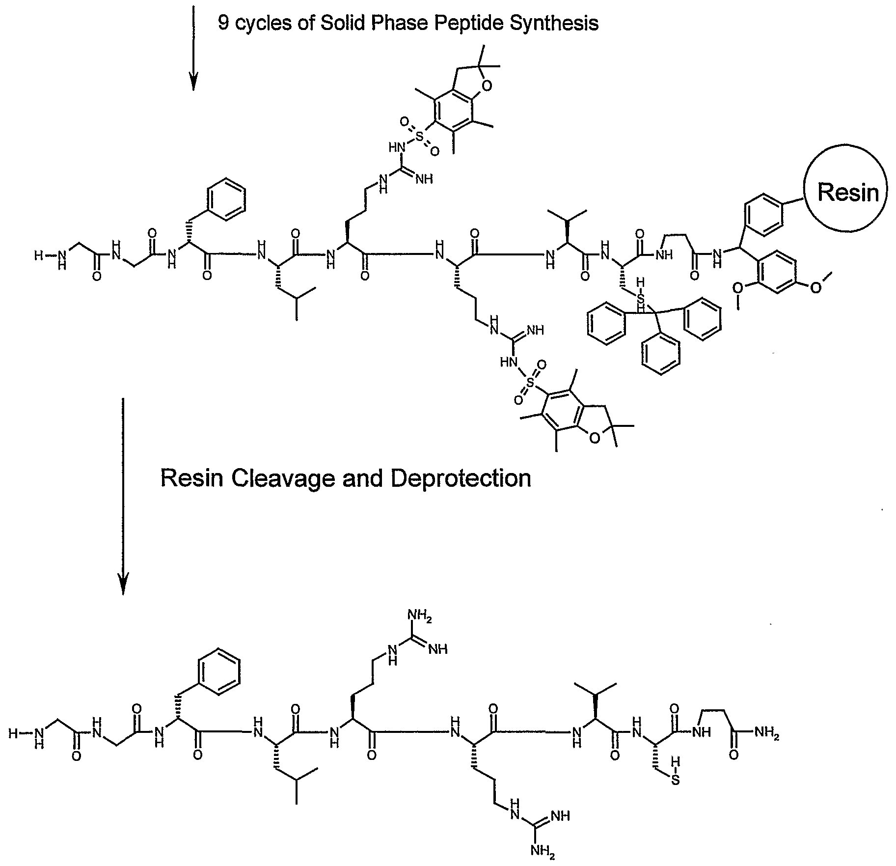 solid phase peptide synthesis thesis Chempep supplies custom peptides, catalog peptides, generic peptides, cosmetic peptides, antibodies, fmoc amino acids, boc amino acids, cbz amino acids, unusual amino acids, solid phase resins, linkers, peptide coupling reagents, n-protecting reagents specializing in custom peptide synthesis.