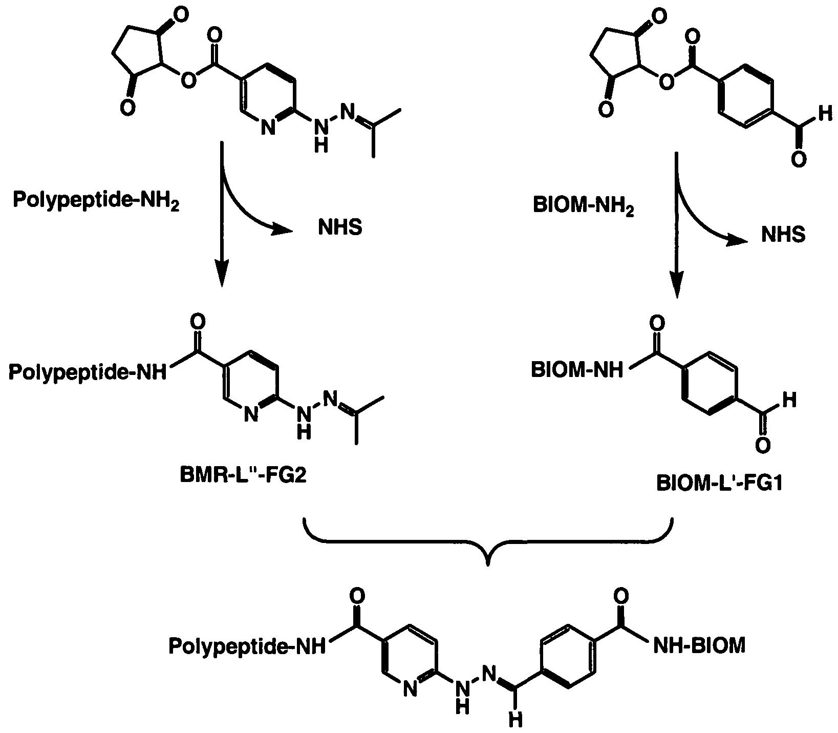 Patent wo2008079185a2 pesticide biomarker google patentsuche figure imgf0000860001 nvjuhfo Choice Image