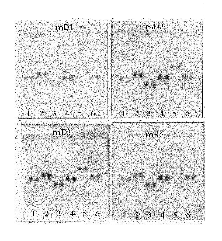 WO2009119538A1 - エピメラーゼ活性を有する新規ポリペプチド、その製造方法ならびにその利用方法         - Google PatentsFamily