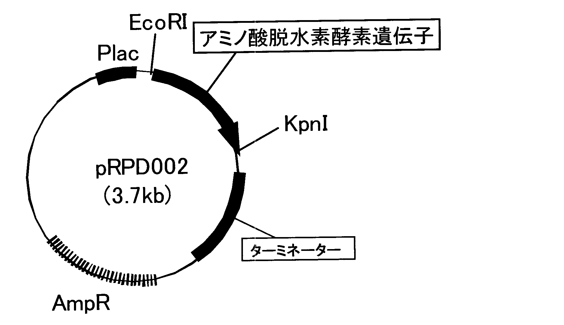 WO2010067578A1 - 新規なアミノ酸脱水素酵素、およびl-アミノ酸、2-オキソ酸、又はd-アミノ酸の製造方法          - Google PatentsFamily