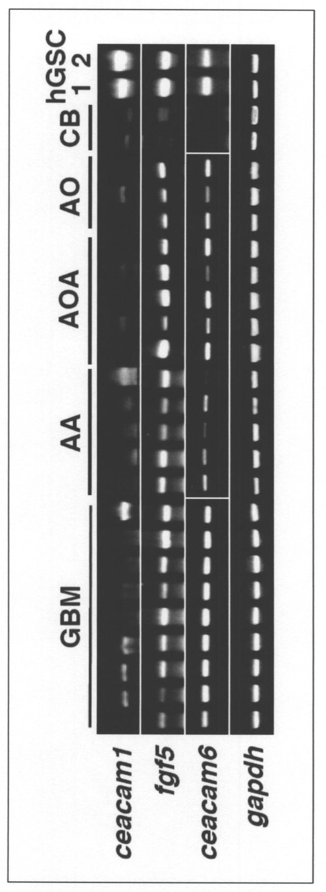 WO2012043747A1 - グリオーマの治療方法、グリオーマの検査方法、所望の物質をグリオーマに送達させる方法、及びそれらの方法に用いられる薬剤         - Google PatentsFamily