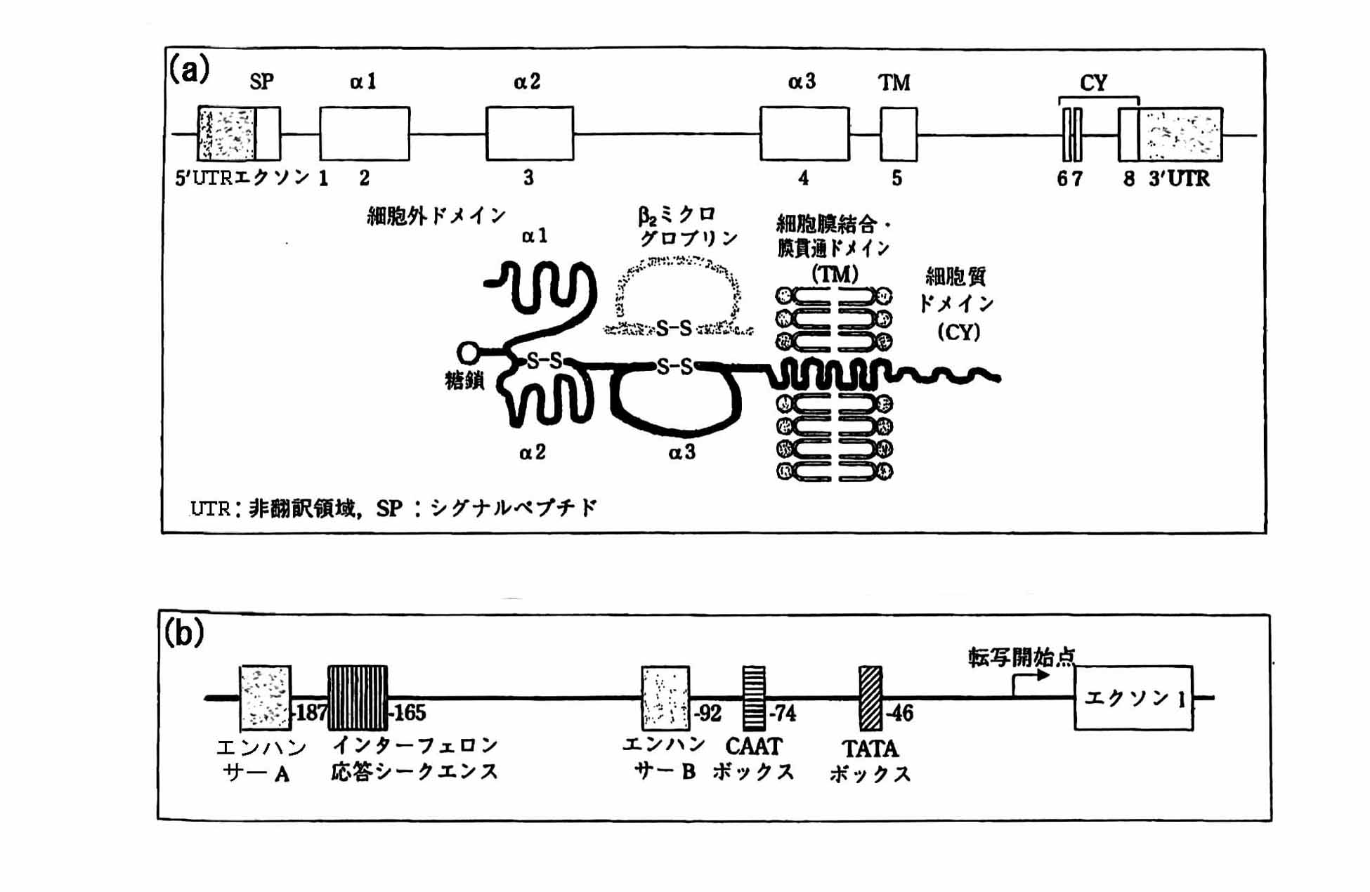 Patents                                                                                                                         Generate link with comments                           Hla遺伝子のdnaタイピング方法及びキット