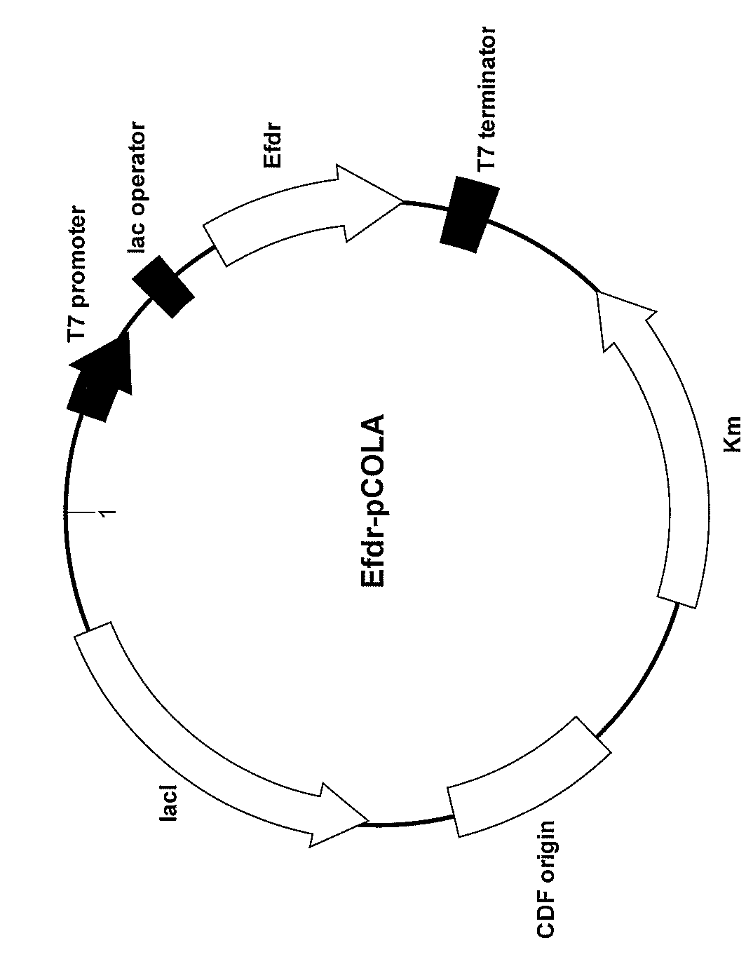 WO2013024527A1 - アルカンの製造方法及びアルカン合成能を有する組換え微生物         - Google PatentsFamily