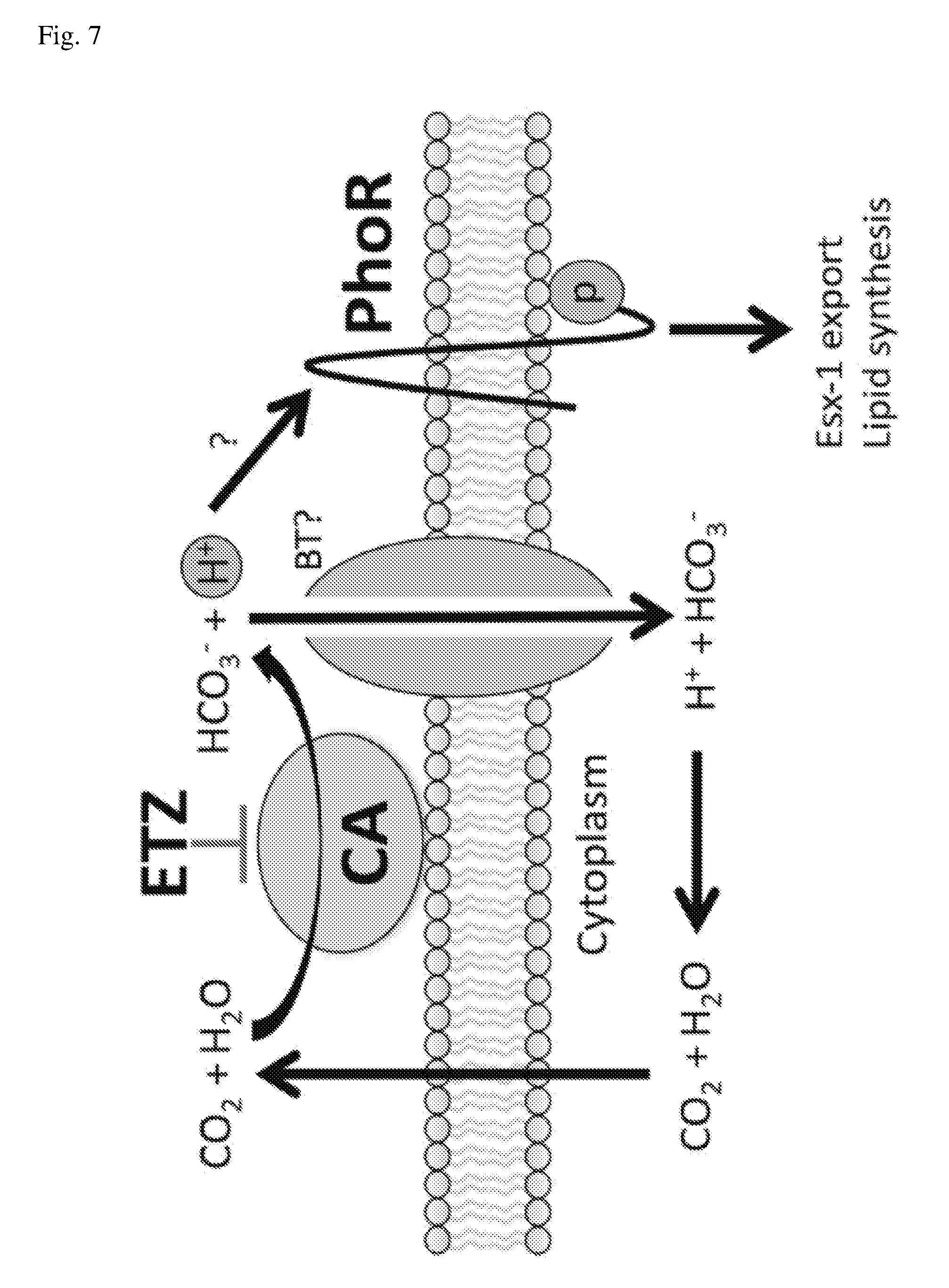 US20180085355A1 - Compositions and Methods for Inhibiting
