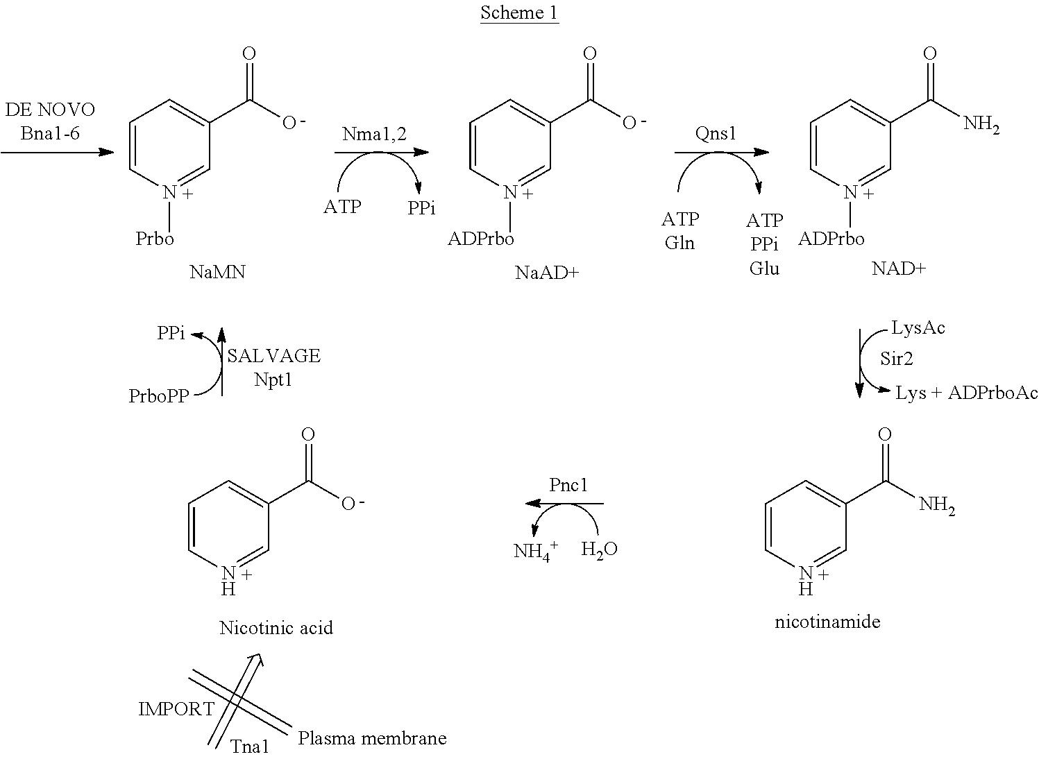 Figure US08383086-20130226-C00001