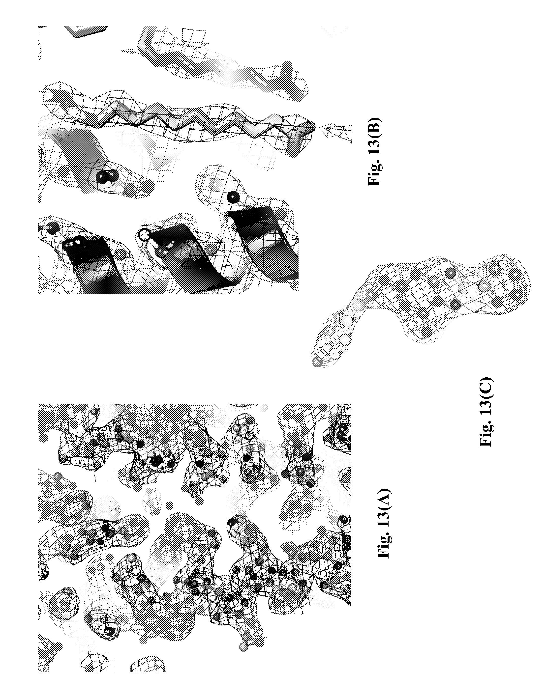 US20120123092A1 - Human a2a adenosine receptor crystals and uses