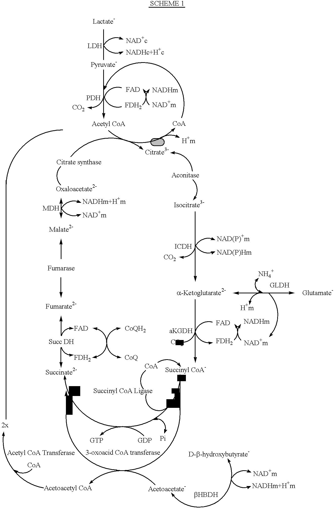 Figure US06316038-20011113-C00004