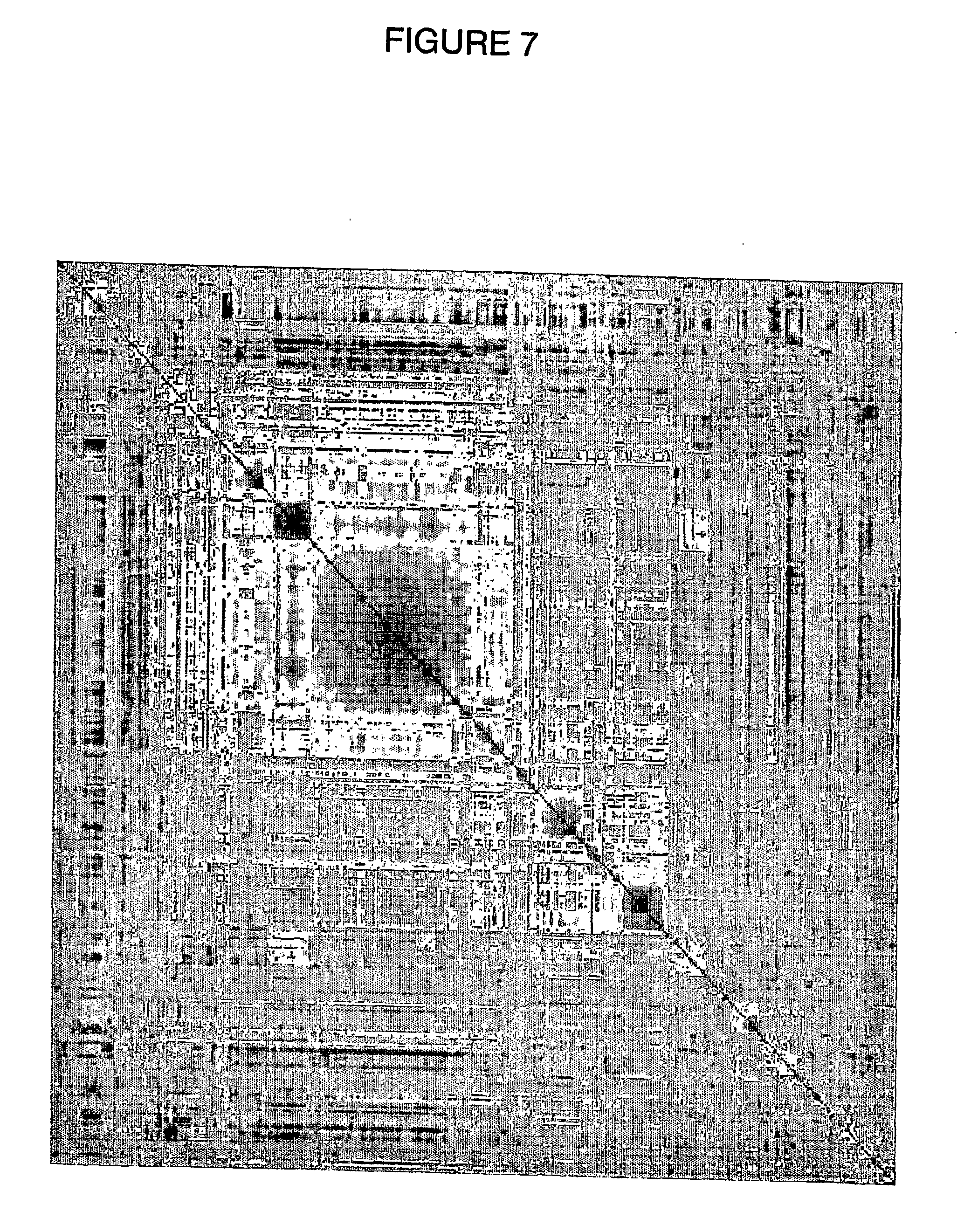 US20070203083A1 - Methods Of Regulating Metabolism And