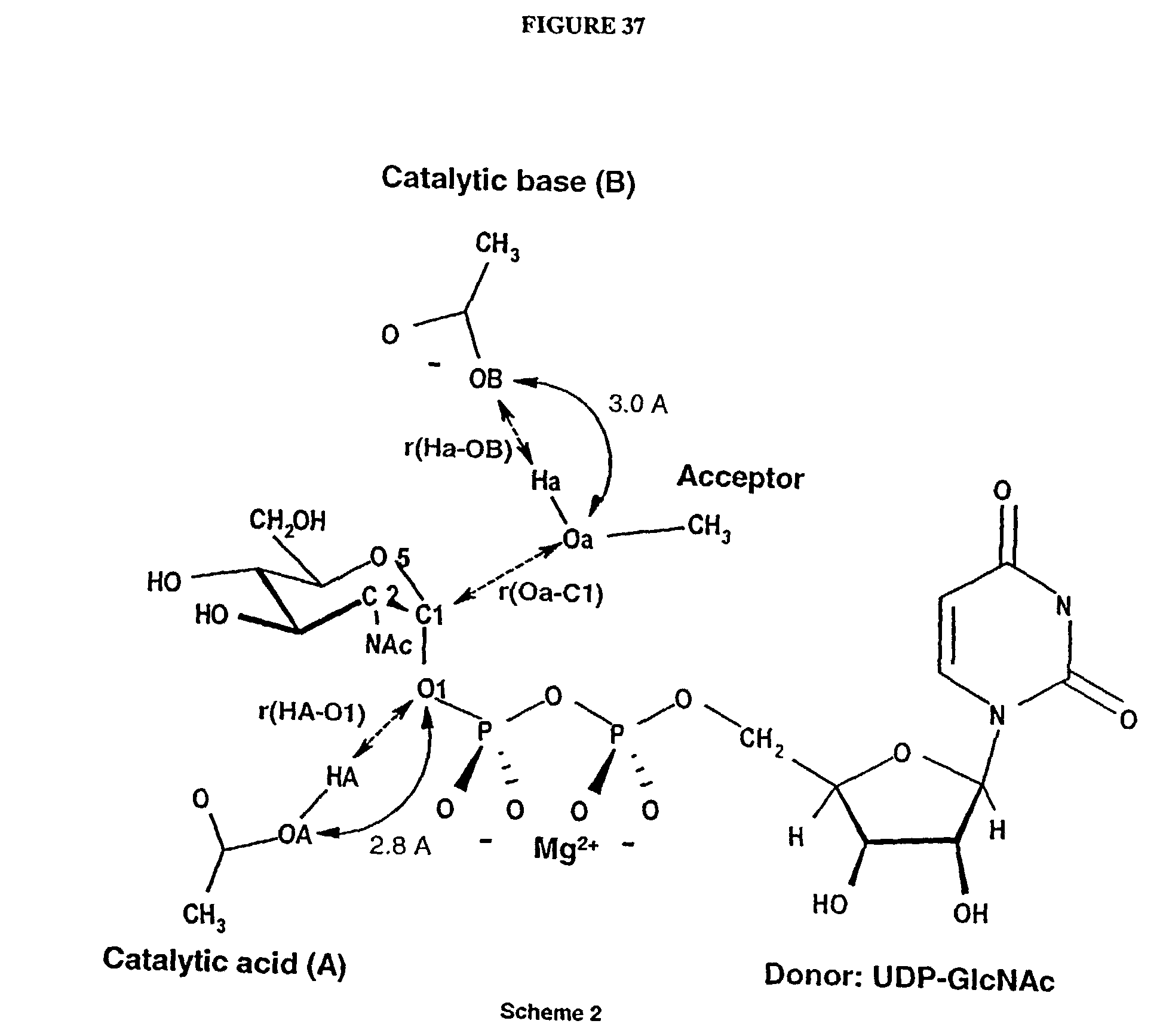 8d9ec69fd4 US20040049352A1 - Designing modulators for glycosyltransferases - Google  Patents