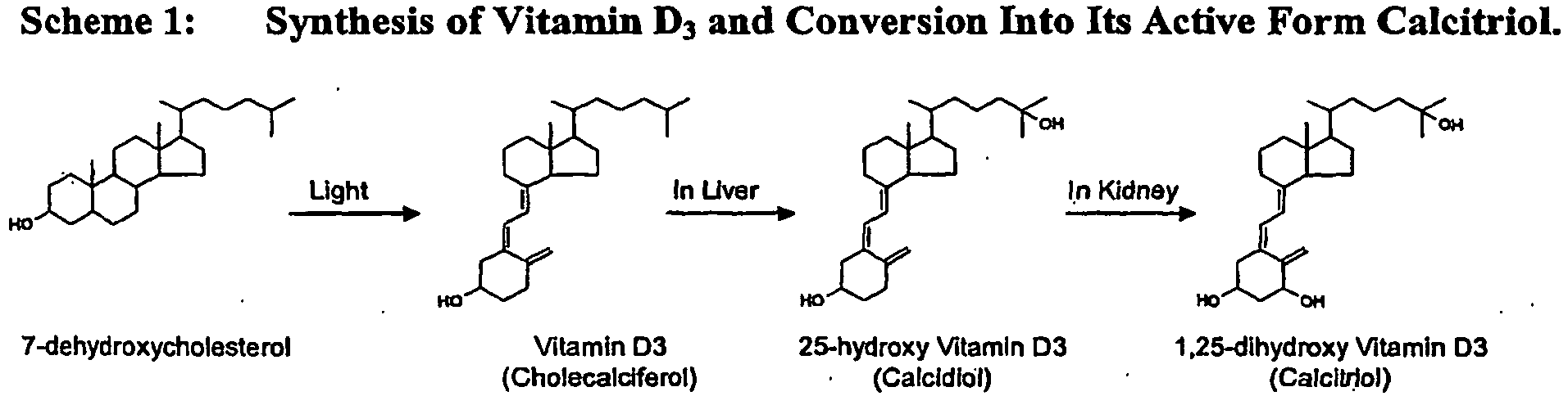 In The Kidney 25 Hydroxy Vitamin D 3 Serves As A Substrate For 1 Alpha Hydroxylase
